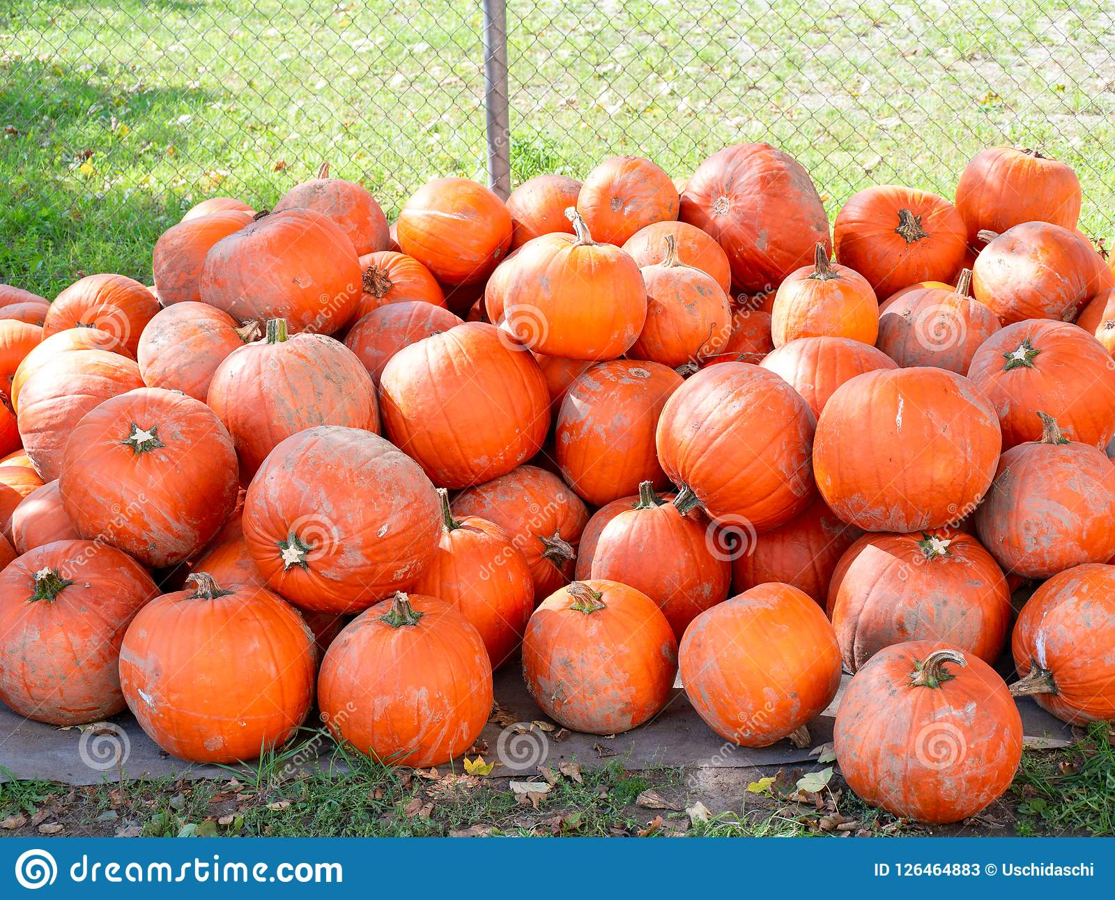 Image of a pile of dirty orange pumpkins