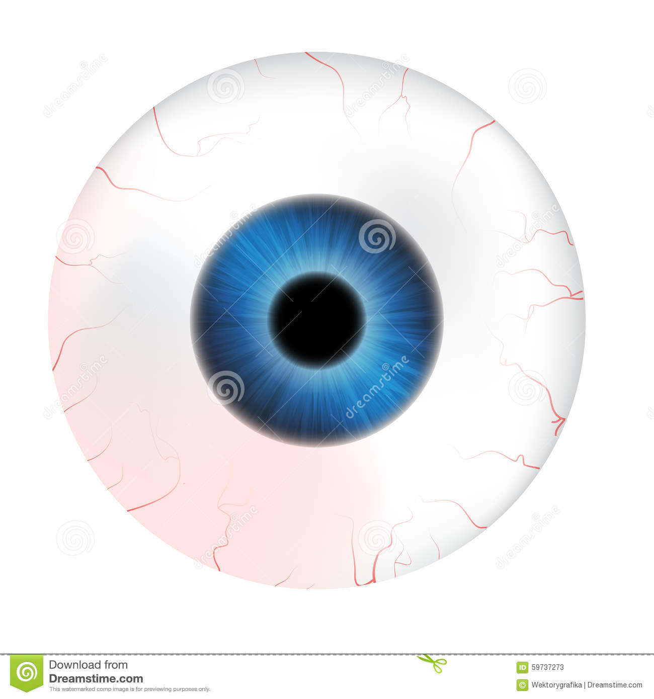 Image Of Realistic Human Eye Ball With Colorful Pupil, Iris
