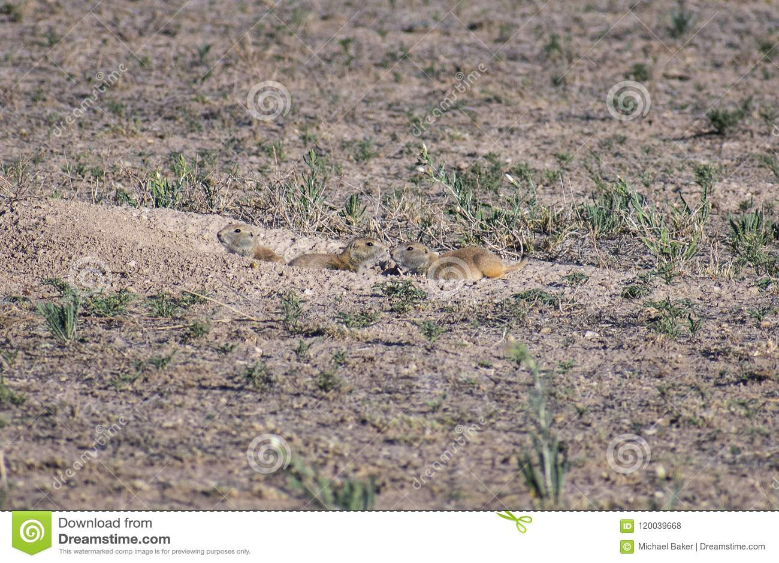 Prairie Dog Companions, Nestled in the Doorway
