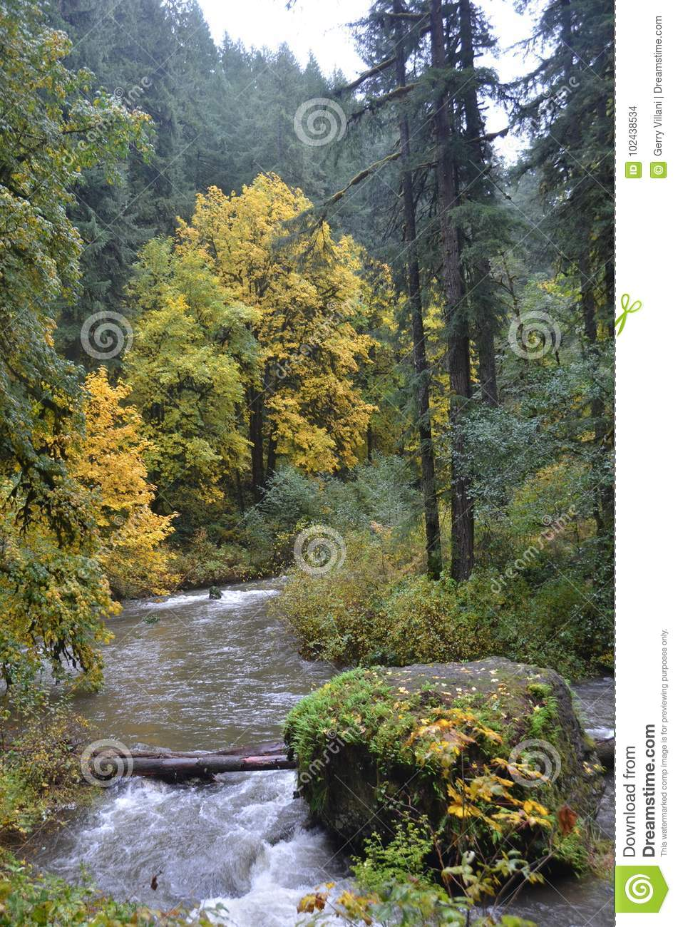 Download Silver Falls State Park, Oregon Stock Photo - Image of park, rock: 102438534