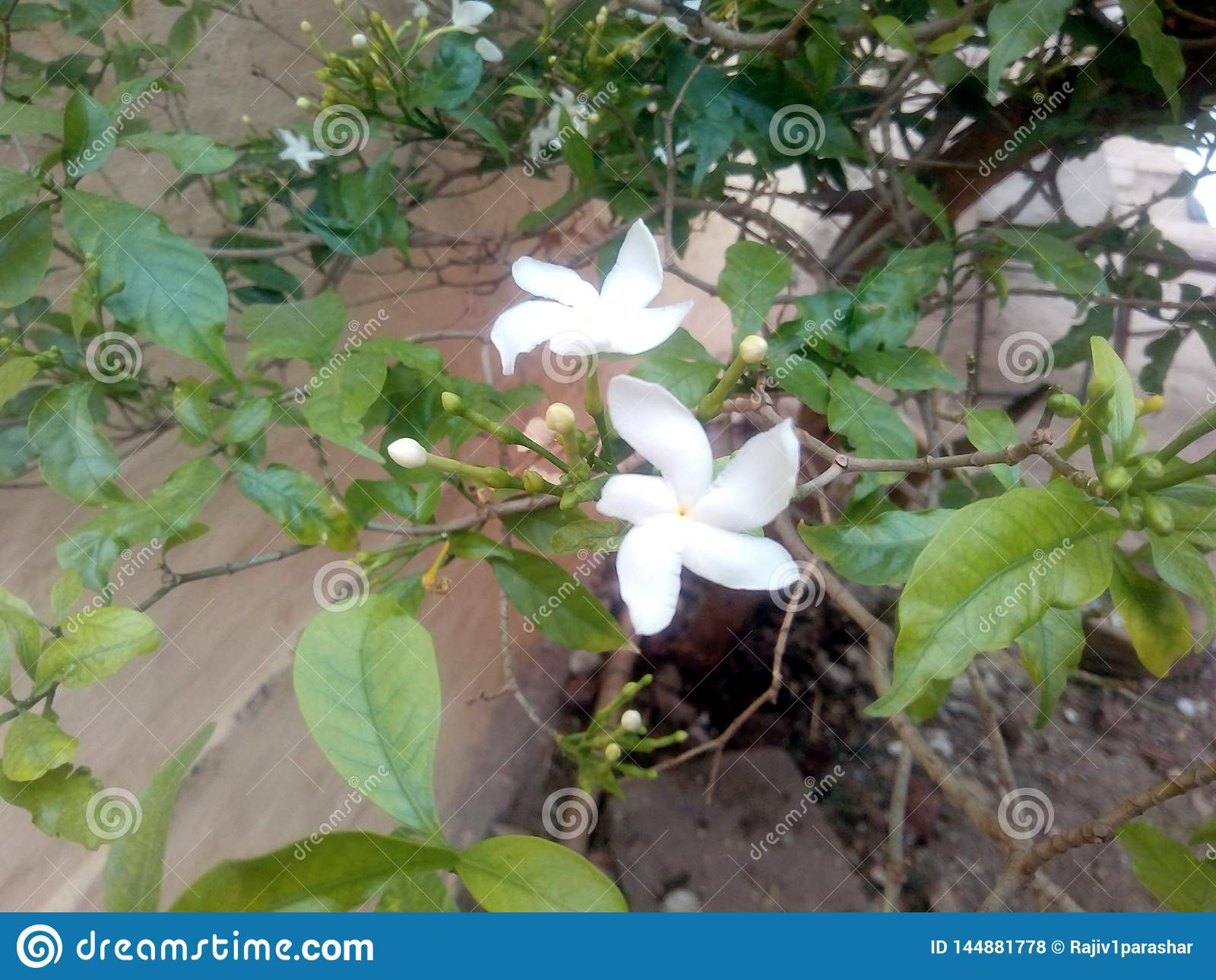 This is the image of white flower with green leafs