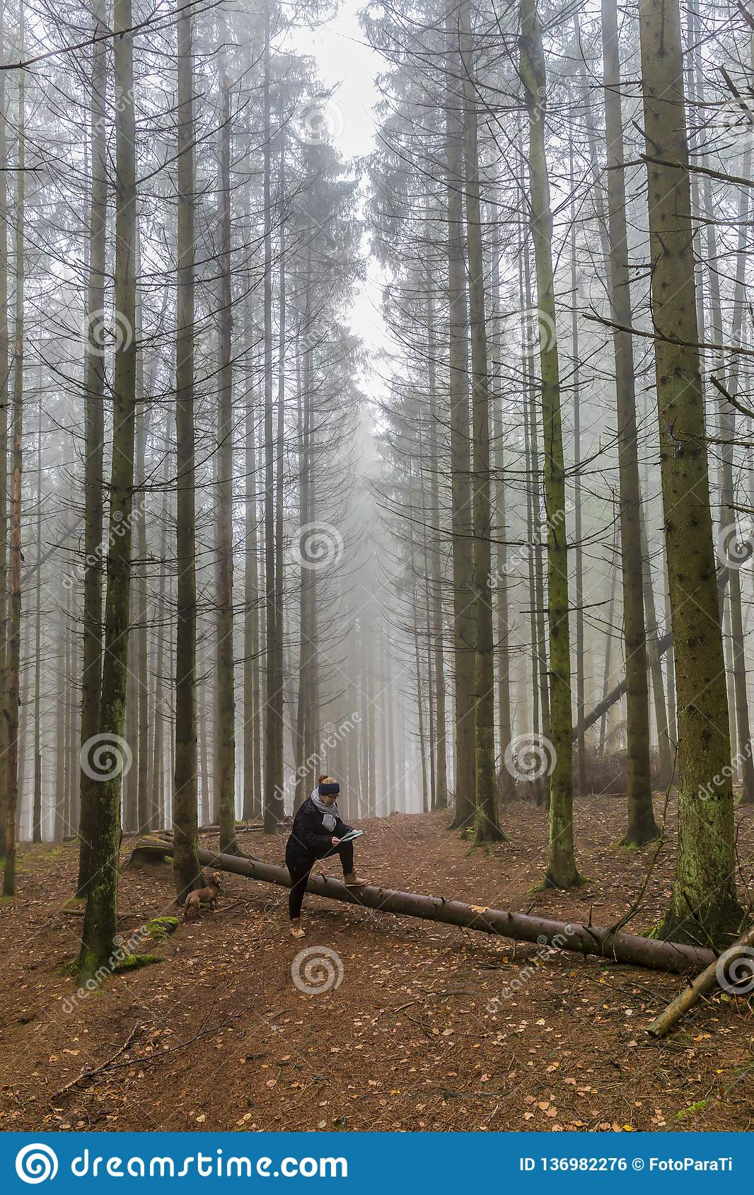 Image of a woman looking at a paper map resting on a trunk of a fallen tree among tall pine trees in the forest