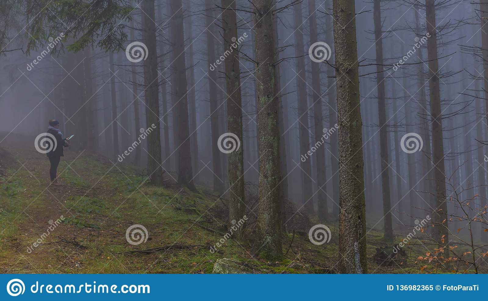 Image of a woman observing a paper map among tall pine trees in the forest