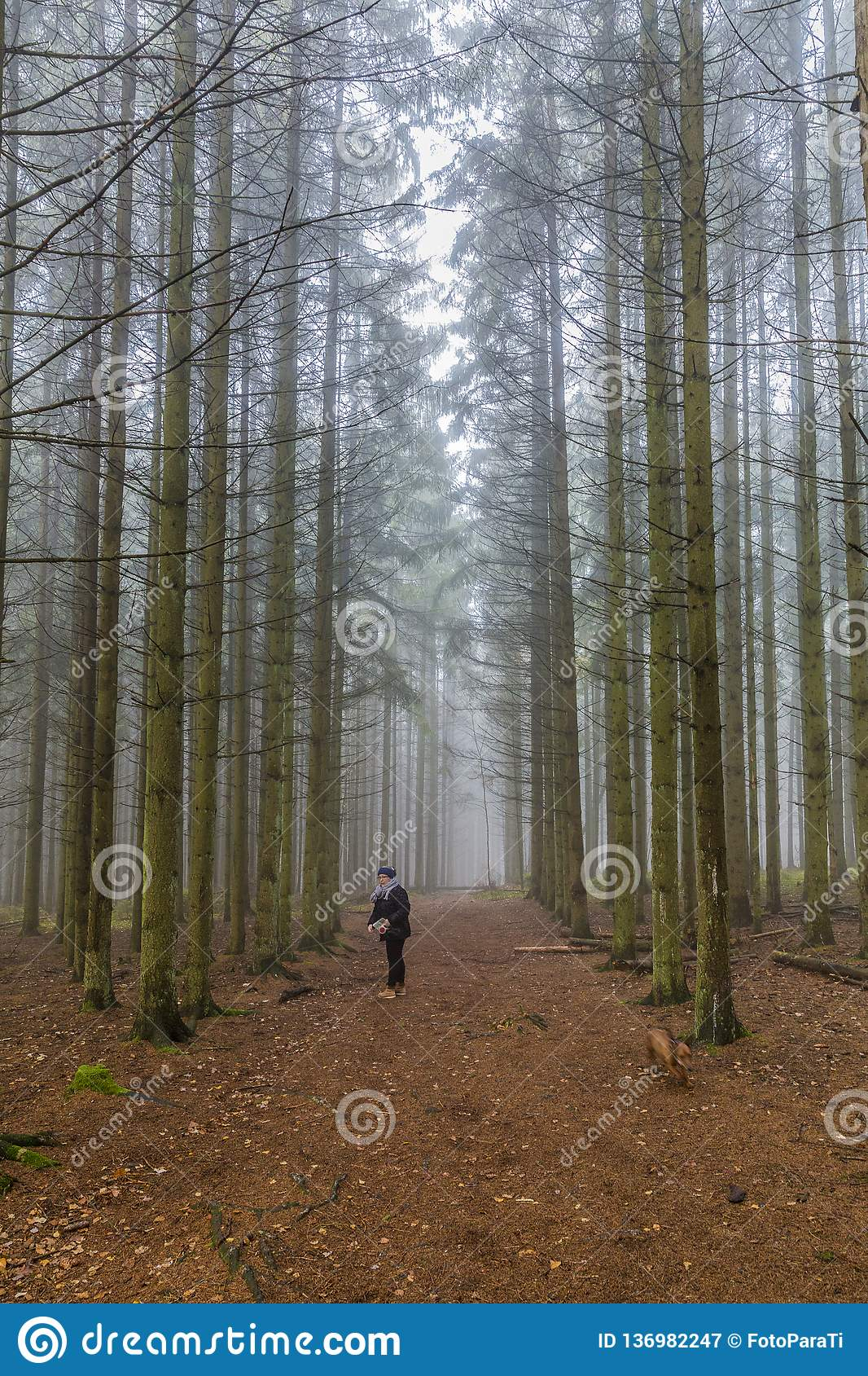 Image of a woman standing on a trail looking for her dog among tall pine trees in the forest