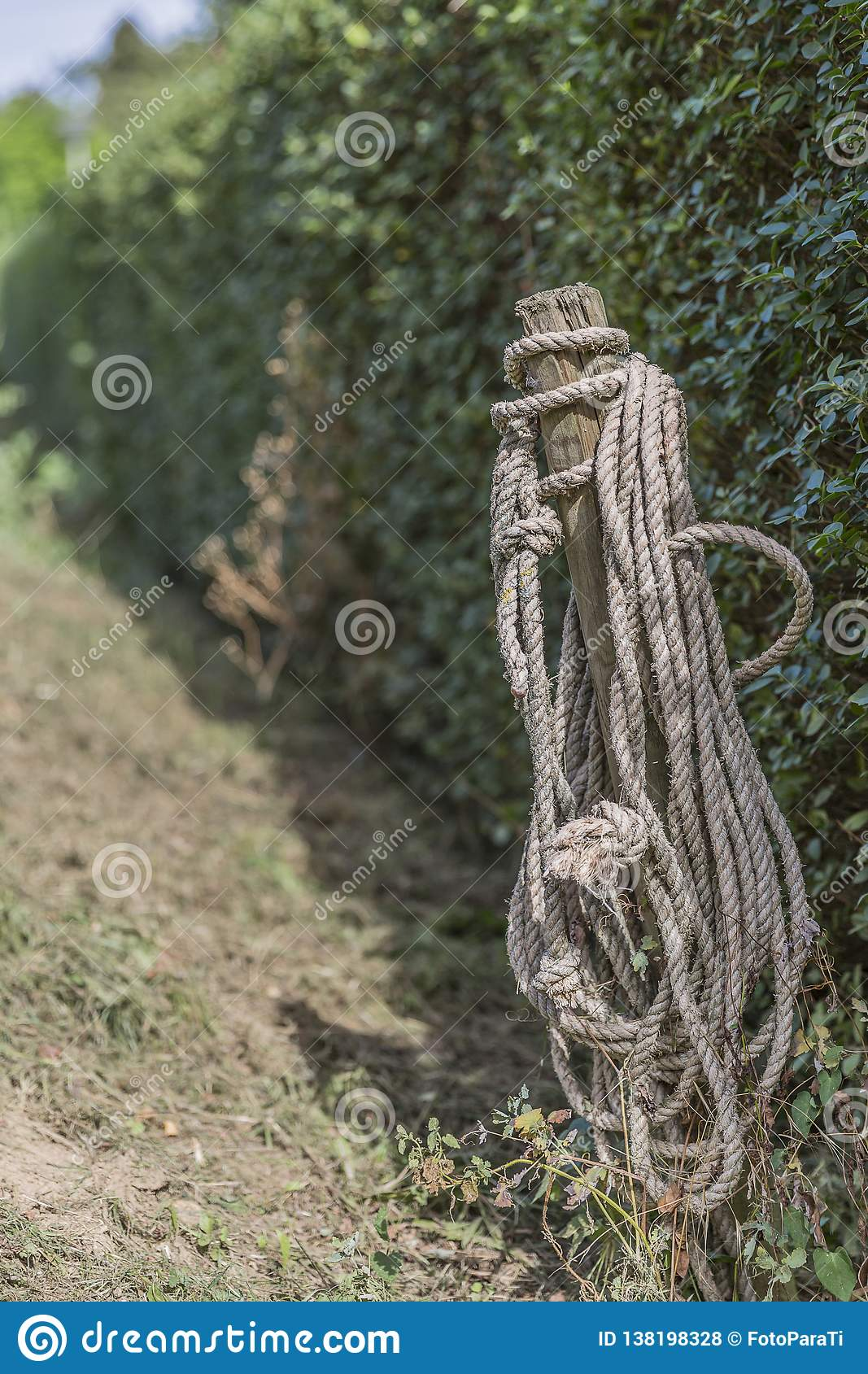 Image of a wooden pole with a rope with green vegetation background