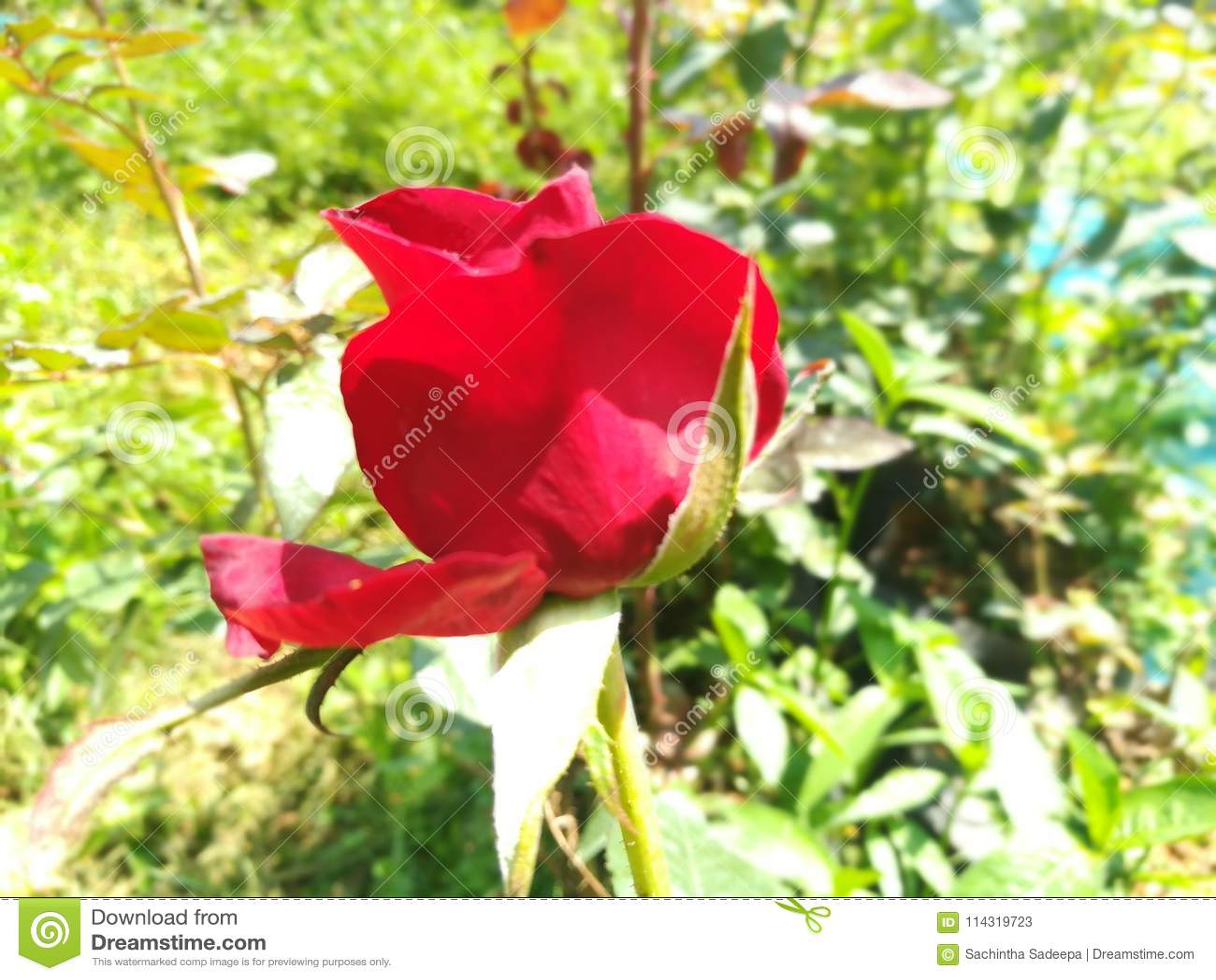 World most beautiful flowers stock image image of beautiful world this image is world most beautiful flowers izmirmasajfo