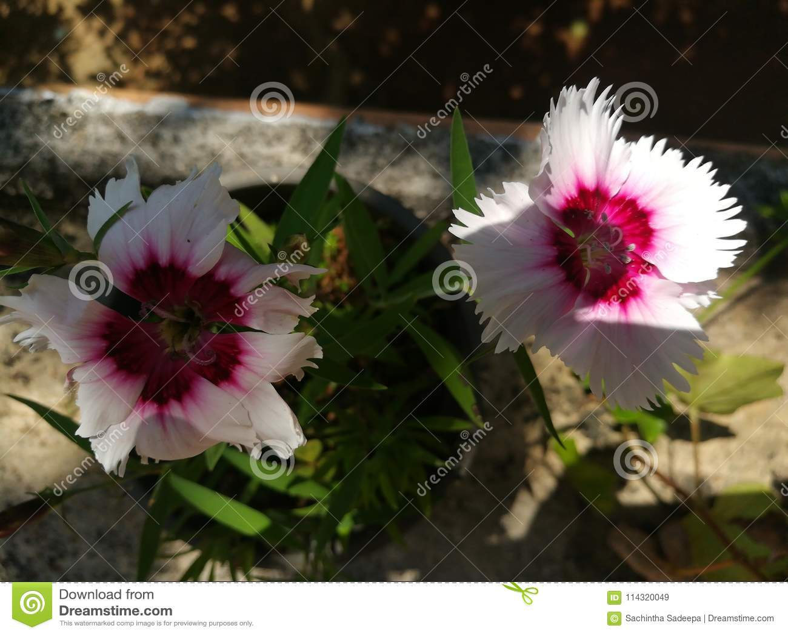 World most beautiful flowers stock image image of image rose download world most beautiful flowers stock image image of image rose 114320049 izmirmasajfo