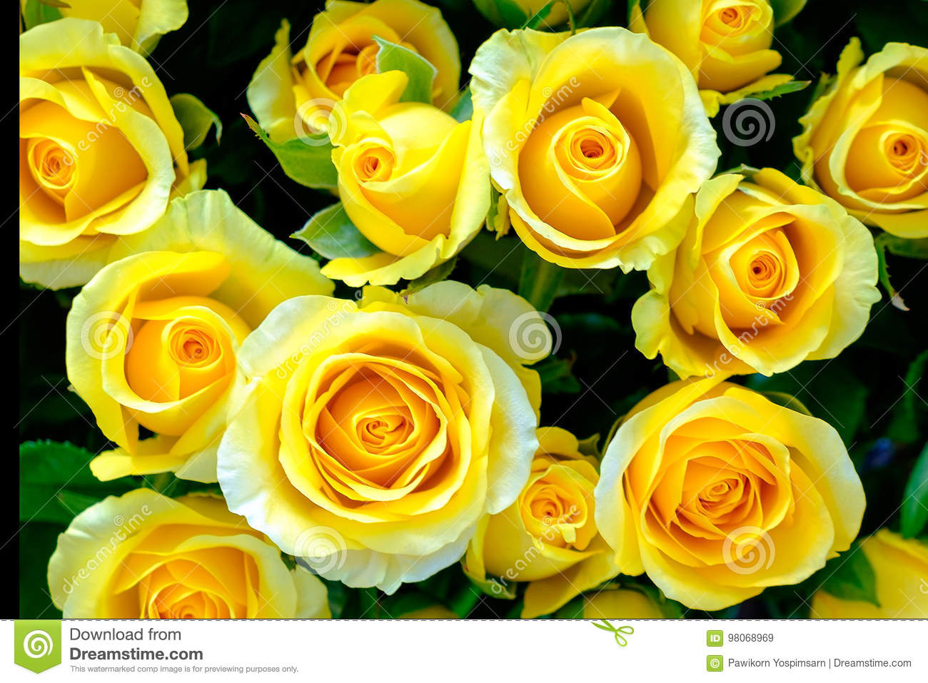 The Image Of Yellow Roses Flower Top View Close Up For Background Or