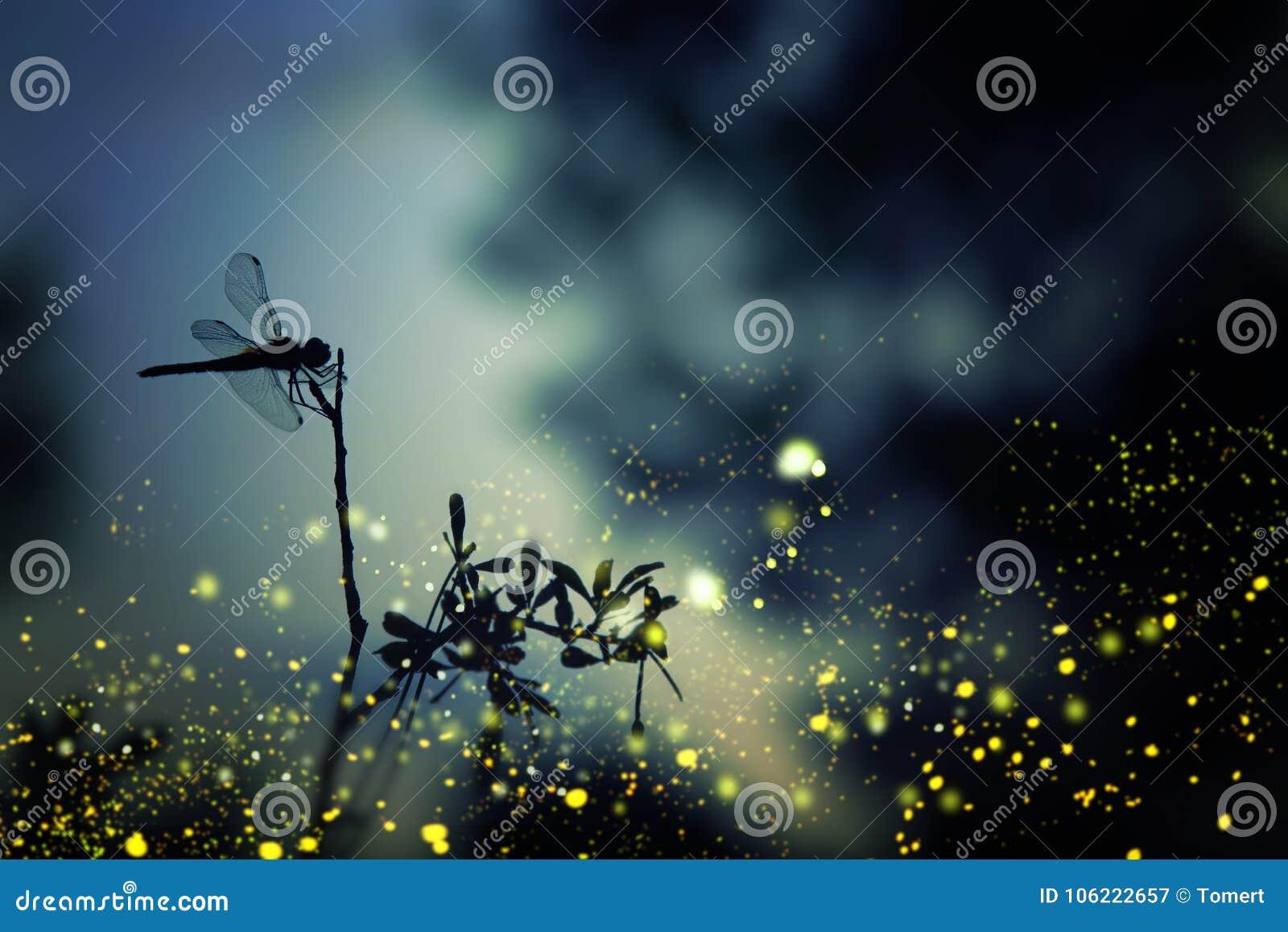 Imagem abstrata e mágica da silhueta da libélula e do voo do vaga-lume no conceito do conto de fadas da floresta da noite