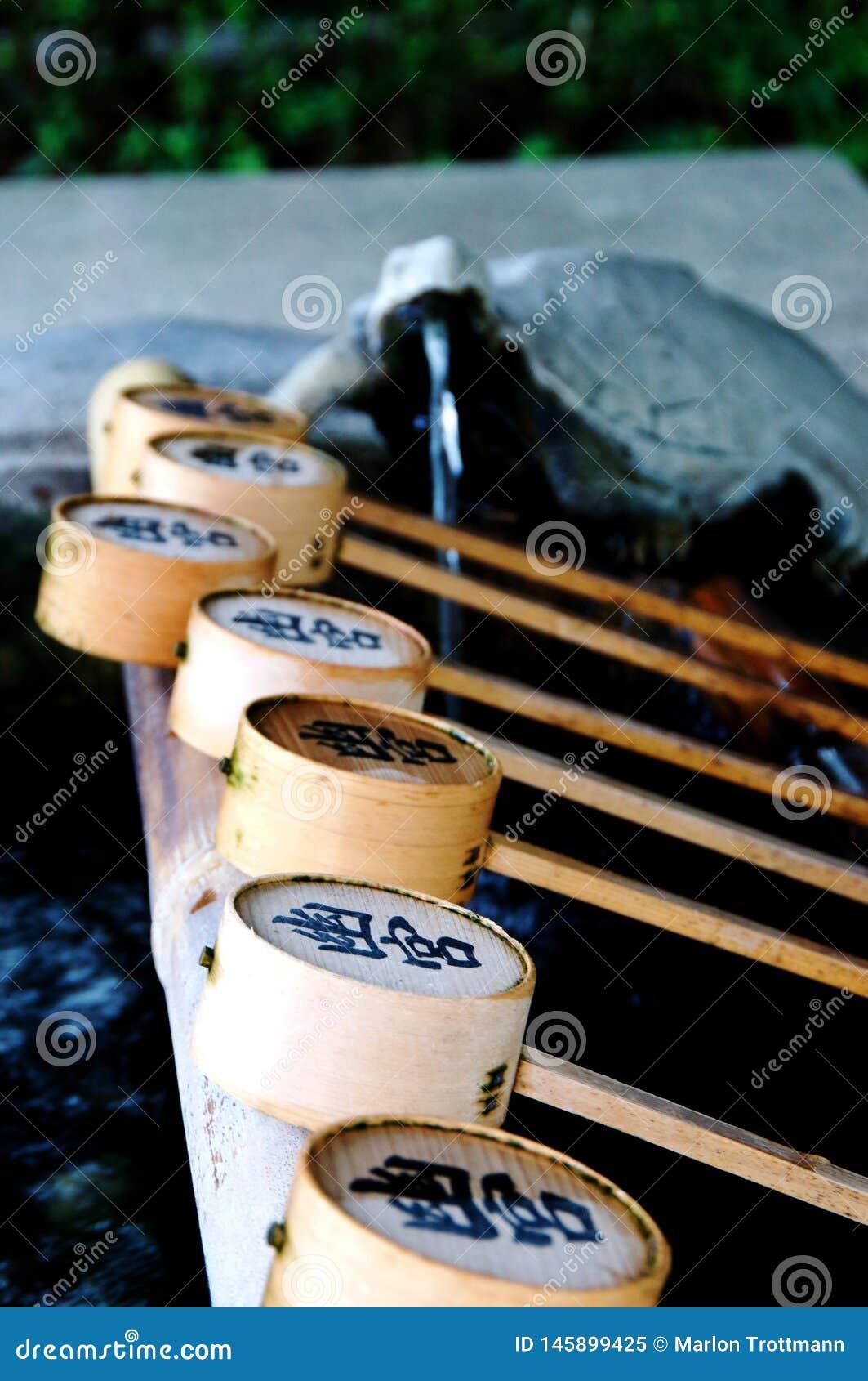 Imagem ascendente próxima de algumas conchas de bambu no santuário de Izanagi, Japão