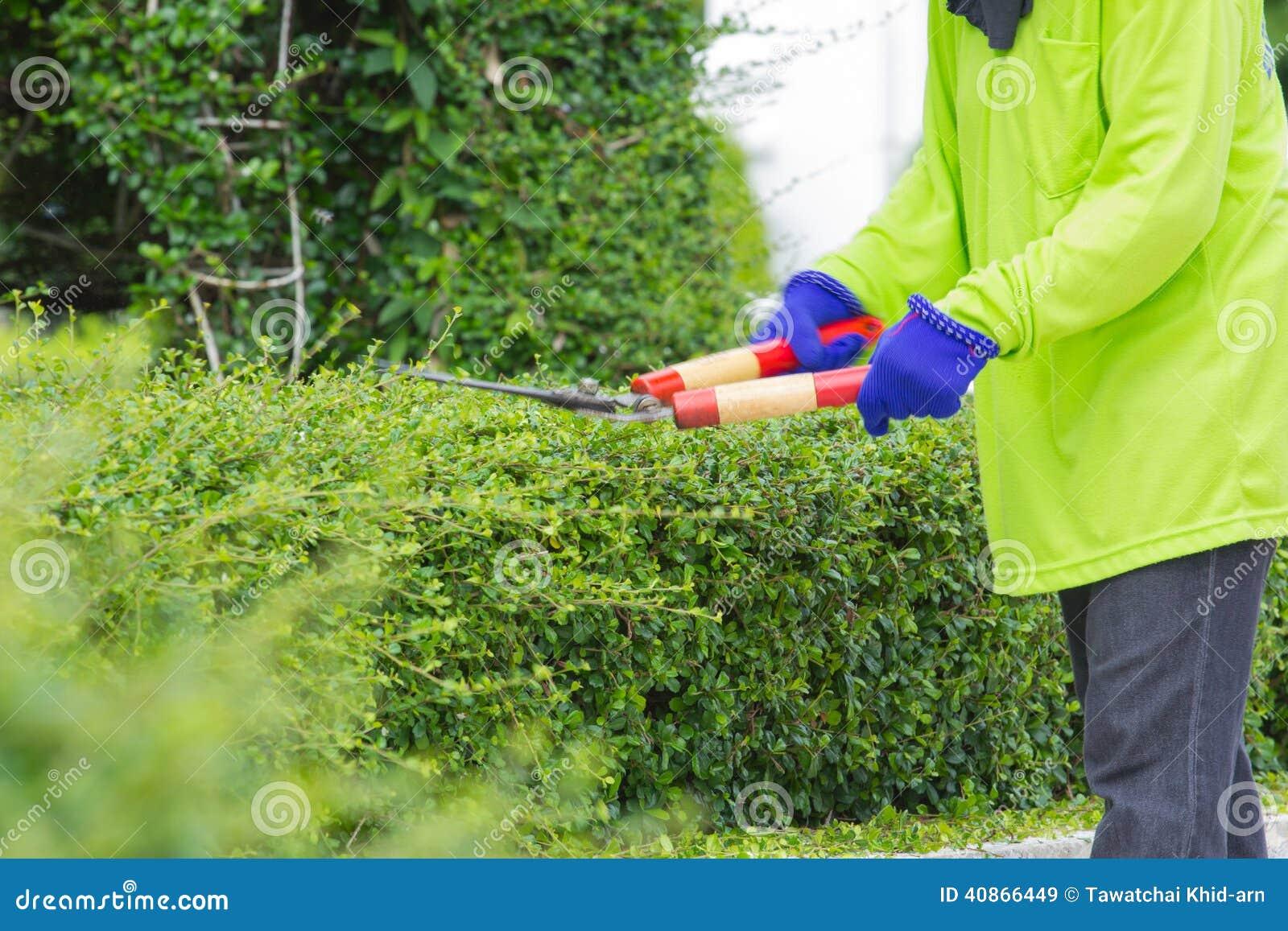 Imagem borrada de um homem que corta o arbusto verde (imagem de borrão do movimento)
