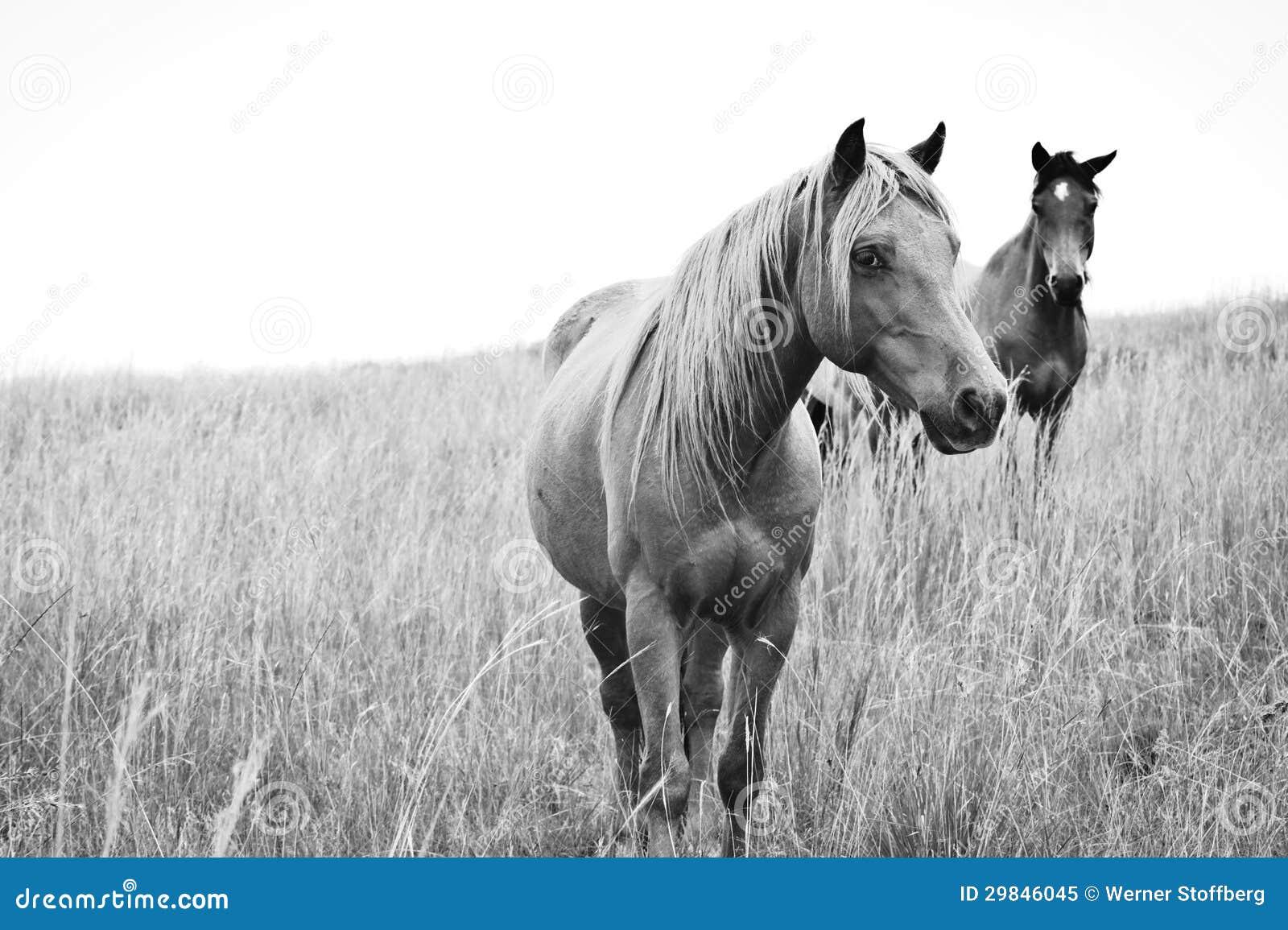 Cavalos chaves altos