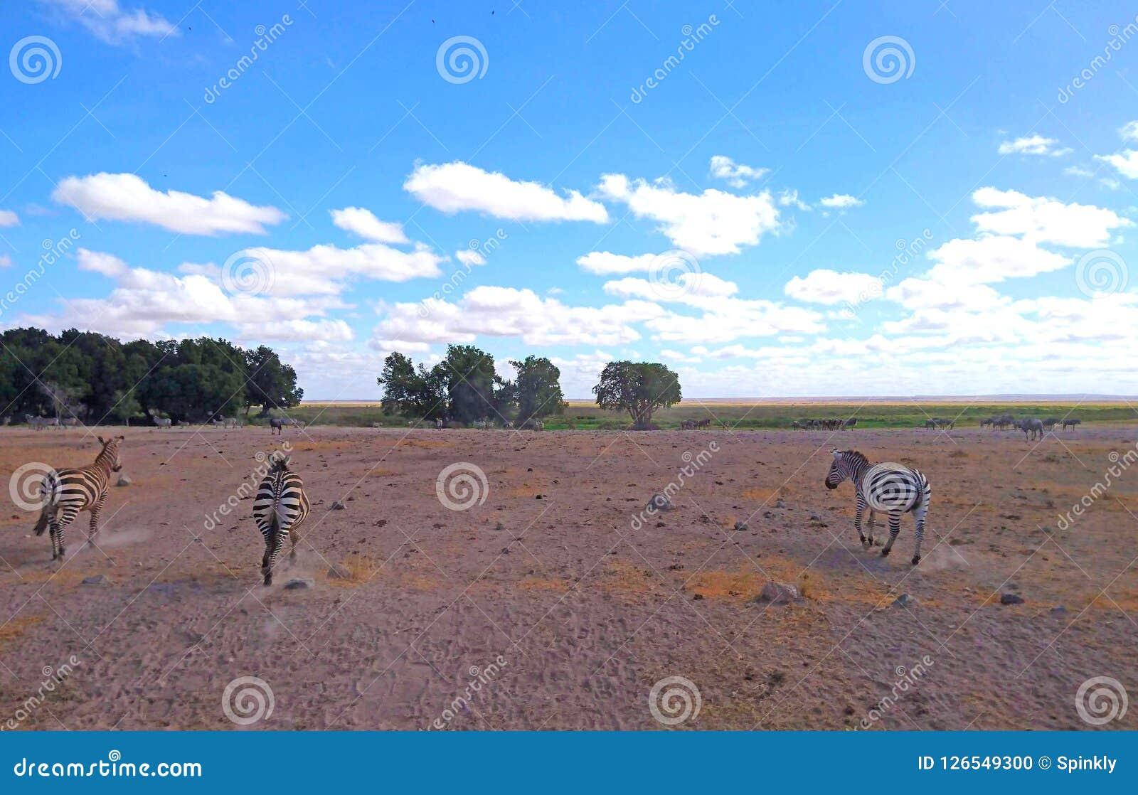 Imagem da paisagem com as zebras para o fundo