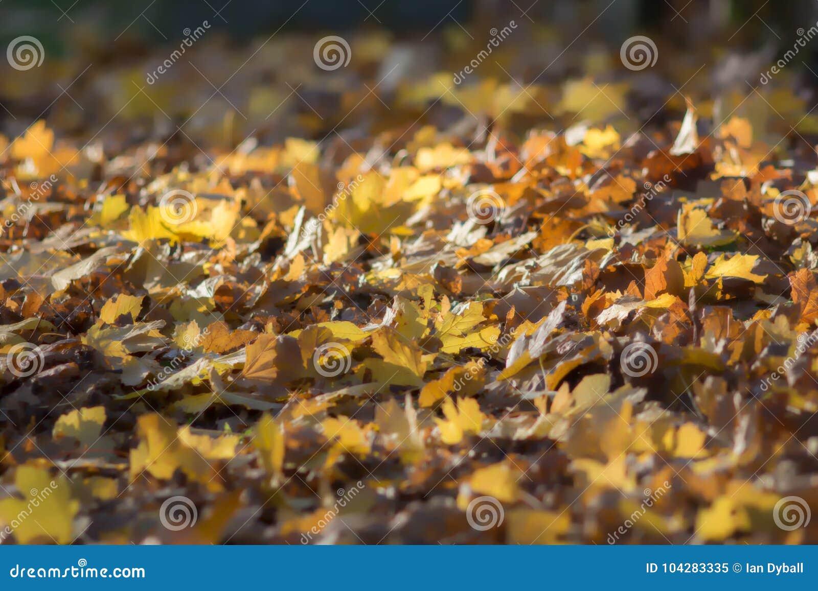 Imagem de fundo sonhadora macia das folhas de outono Queda da folha