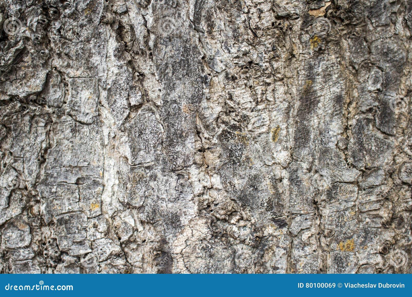 Imagem de madeira do close up da textura Foto macro de uma superfície da árvore Fundo natural da floresta