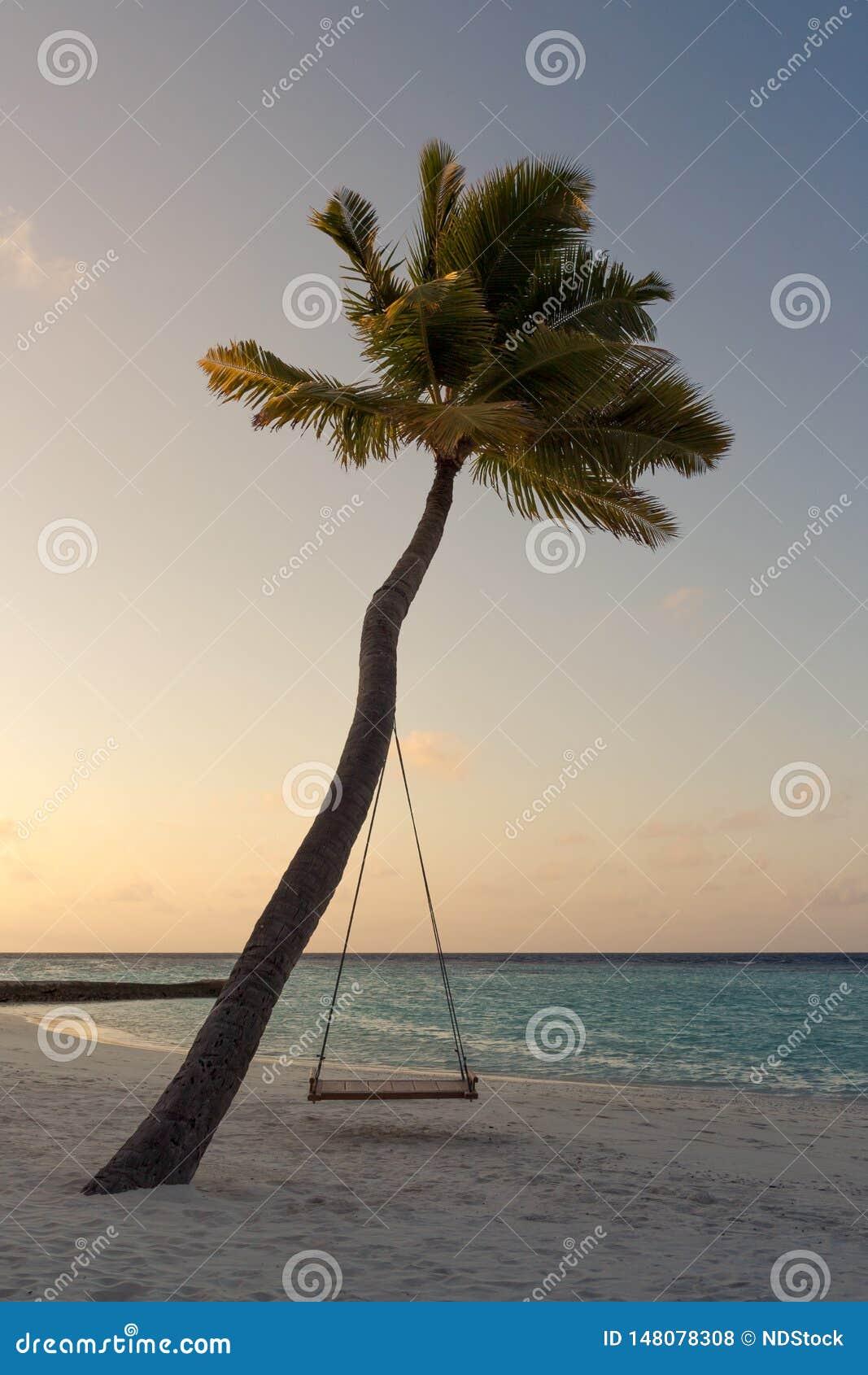 Imagem de uma palmeira e um balanço durante o por do sol