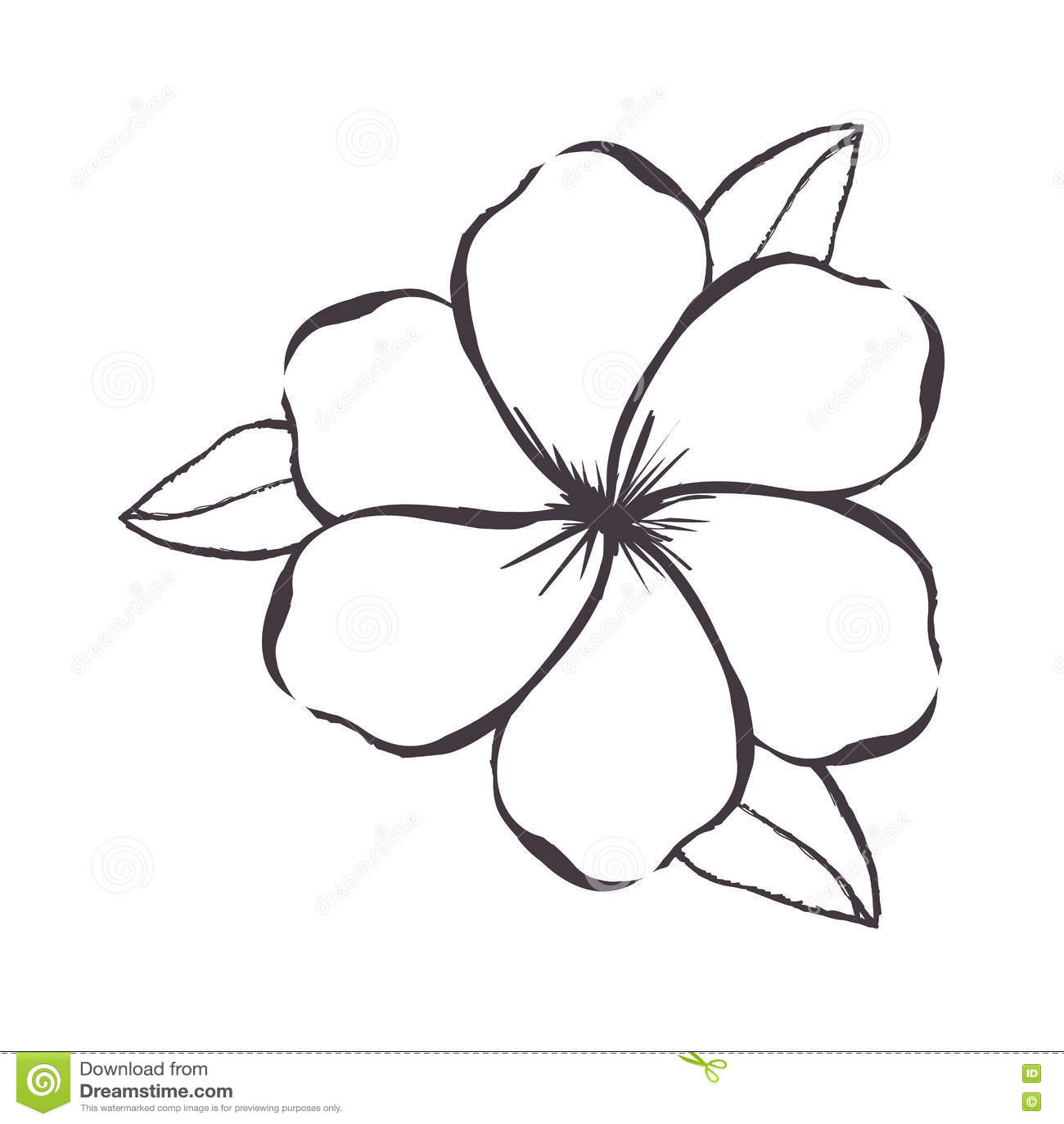 Imagem Delicada Do Icone Do Desenho Da Flor Ilustracao Do Vetor