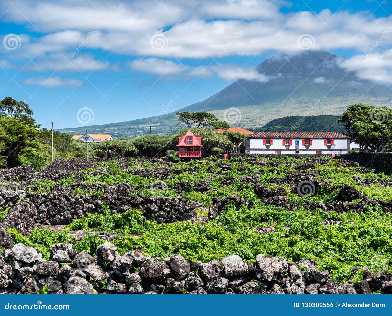 Imagem do pico da montanha com casas e vinhedo na ilha do pico Açores