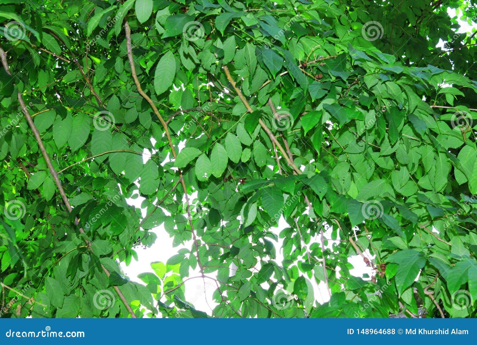 Imagem natural da folha verde Floresta e ?rvore verde da selva Cen?rio natural bonito Selvas tropicais profundas Autumn Landscape