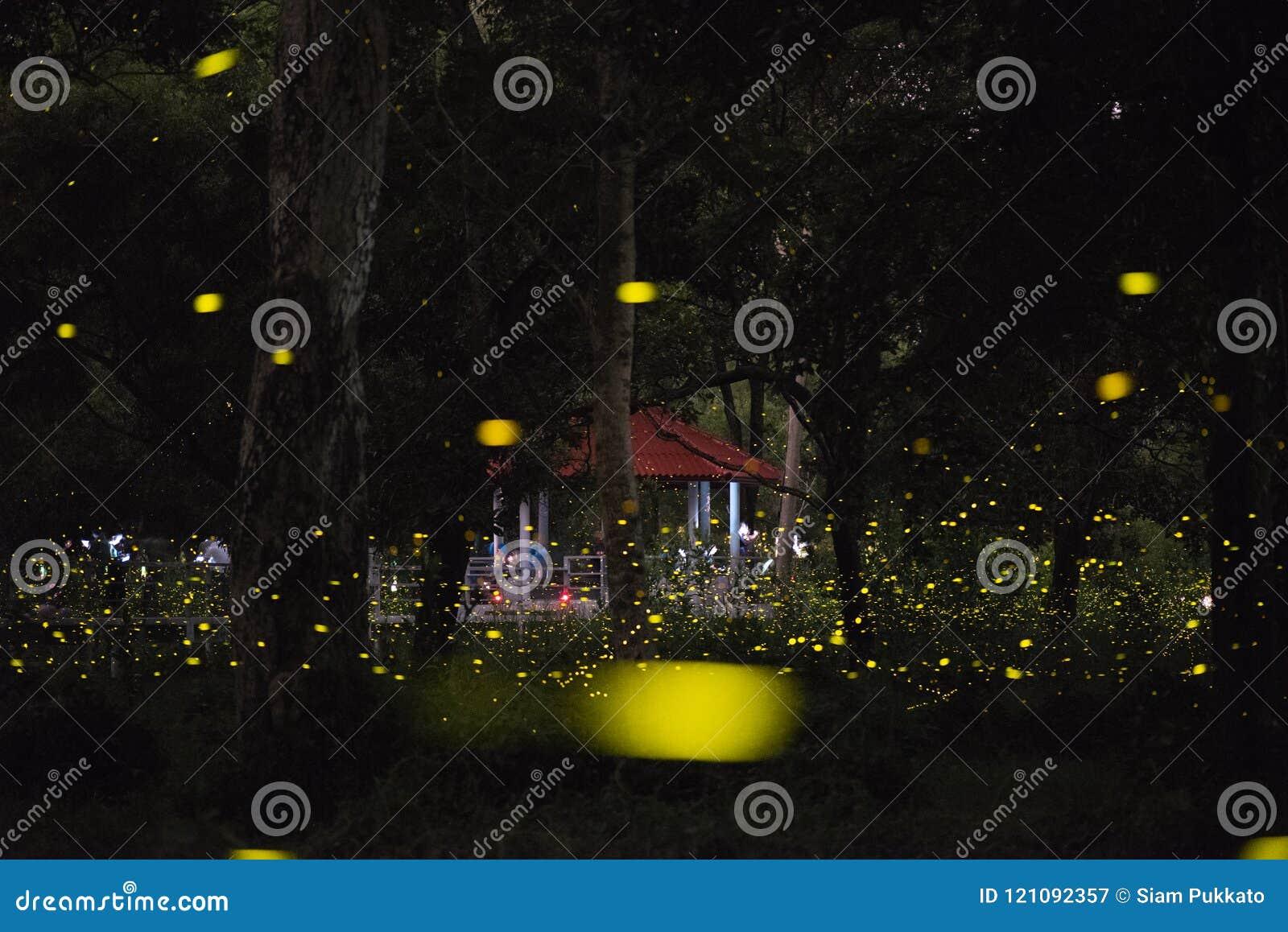 Imagen abstracta y mágica del vuelo de la luciérnaga en el bosque de la noche