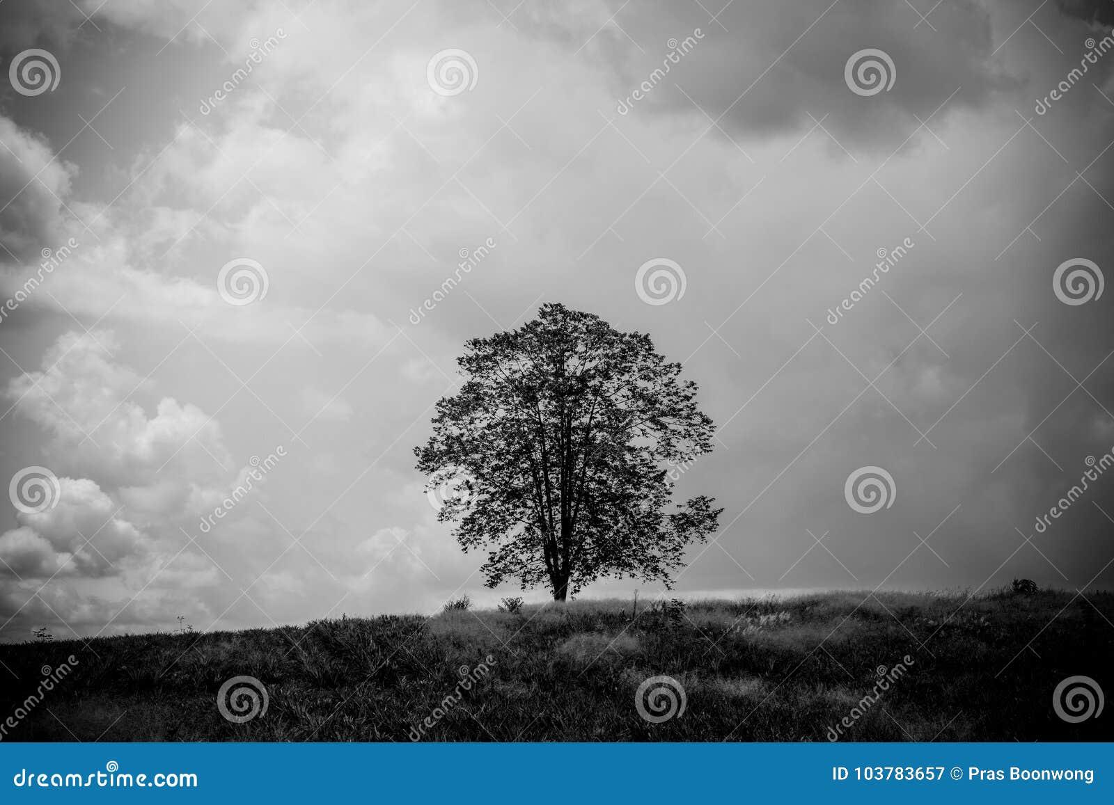Imagen blanco y negro del único un soporte del árbol entre la naturaleza