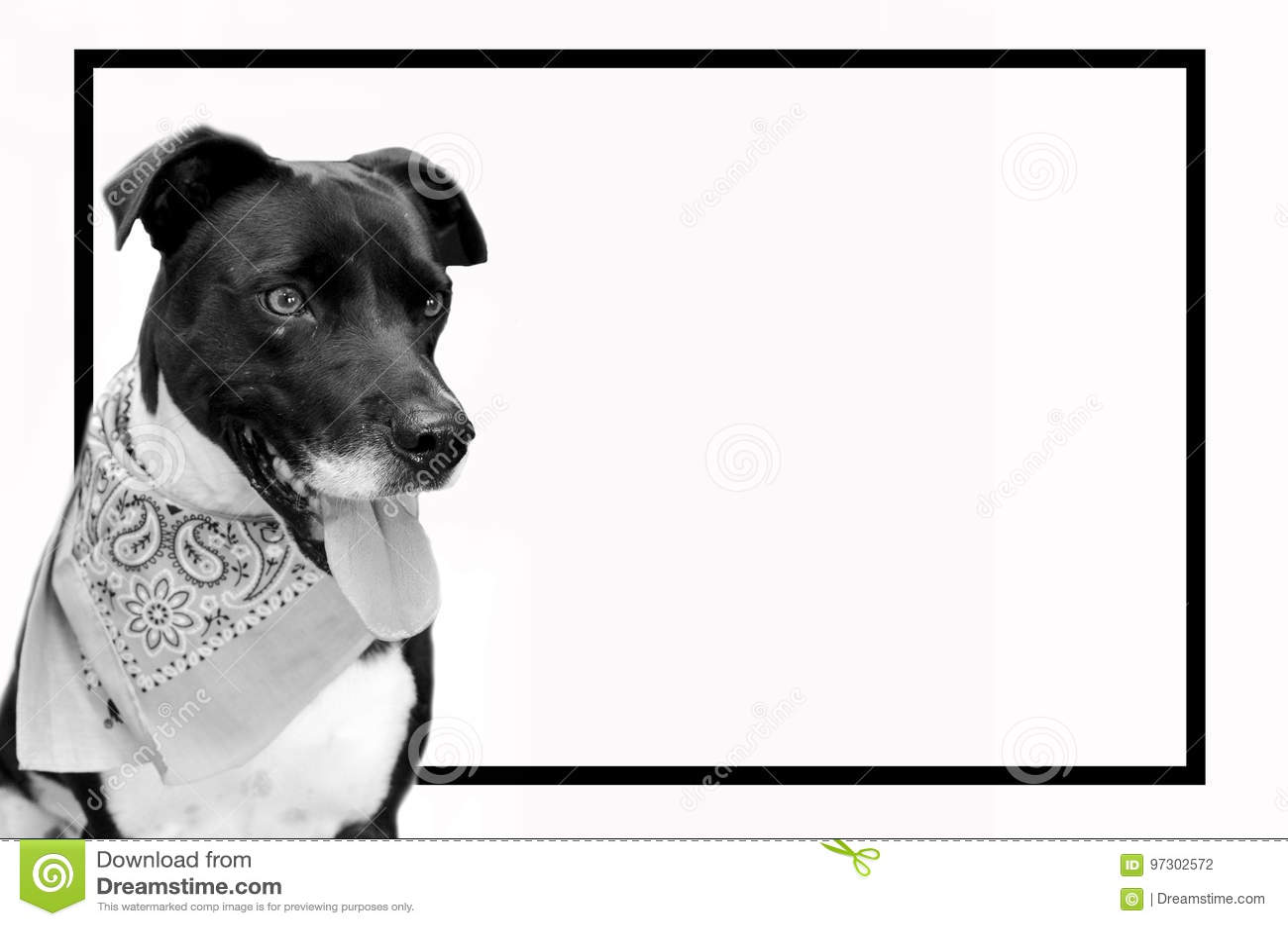 Imagen Blanco Y Negro Del Perro Casero Con El Marco Negro Perrito ...