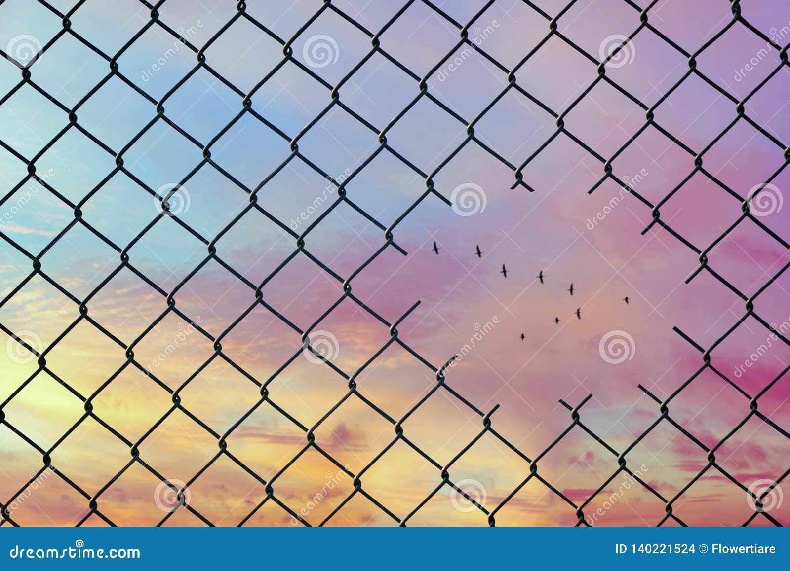 Imagen conceptual de los pájaros que vuelan en la forma de v en el agujero de la cerca de alambre de acero de la malla