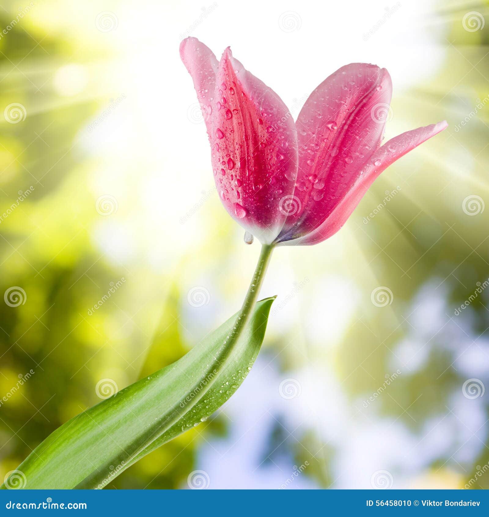 imagen de la flor hermosa foto de archivo imagen de regalo 56458010