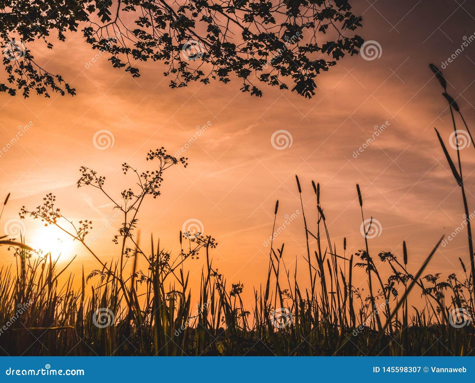 Imagen de la puesta del sol desde un punto de vista bajo