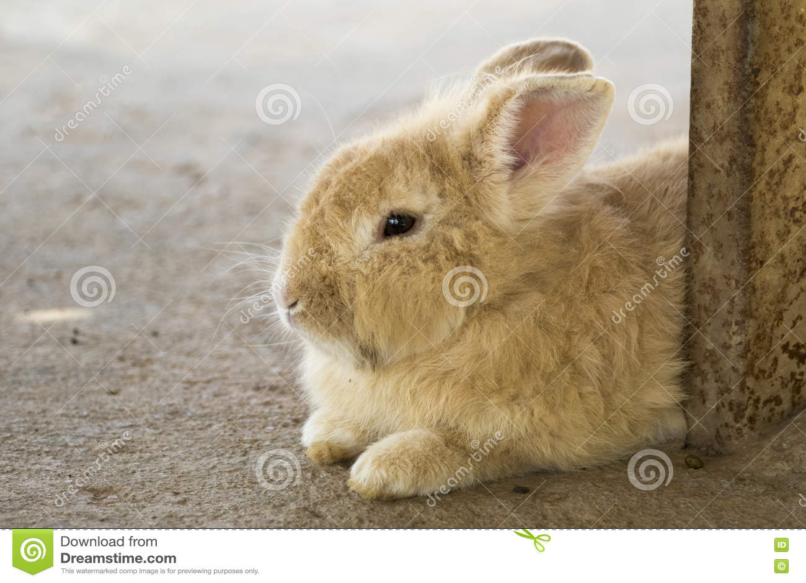 Imagen de un conejo marrón