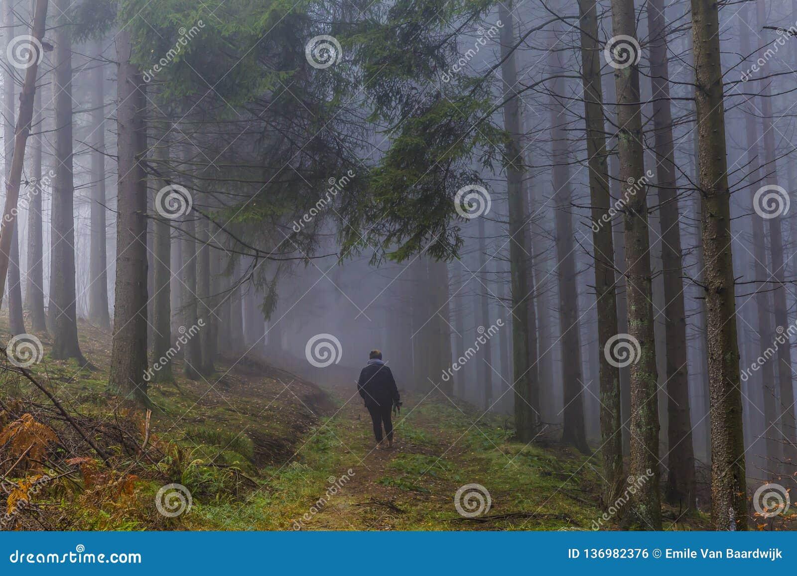Imagen de una mujer que camina entre árboles de pino altos con mucha niebla en el bosque