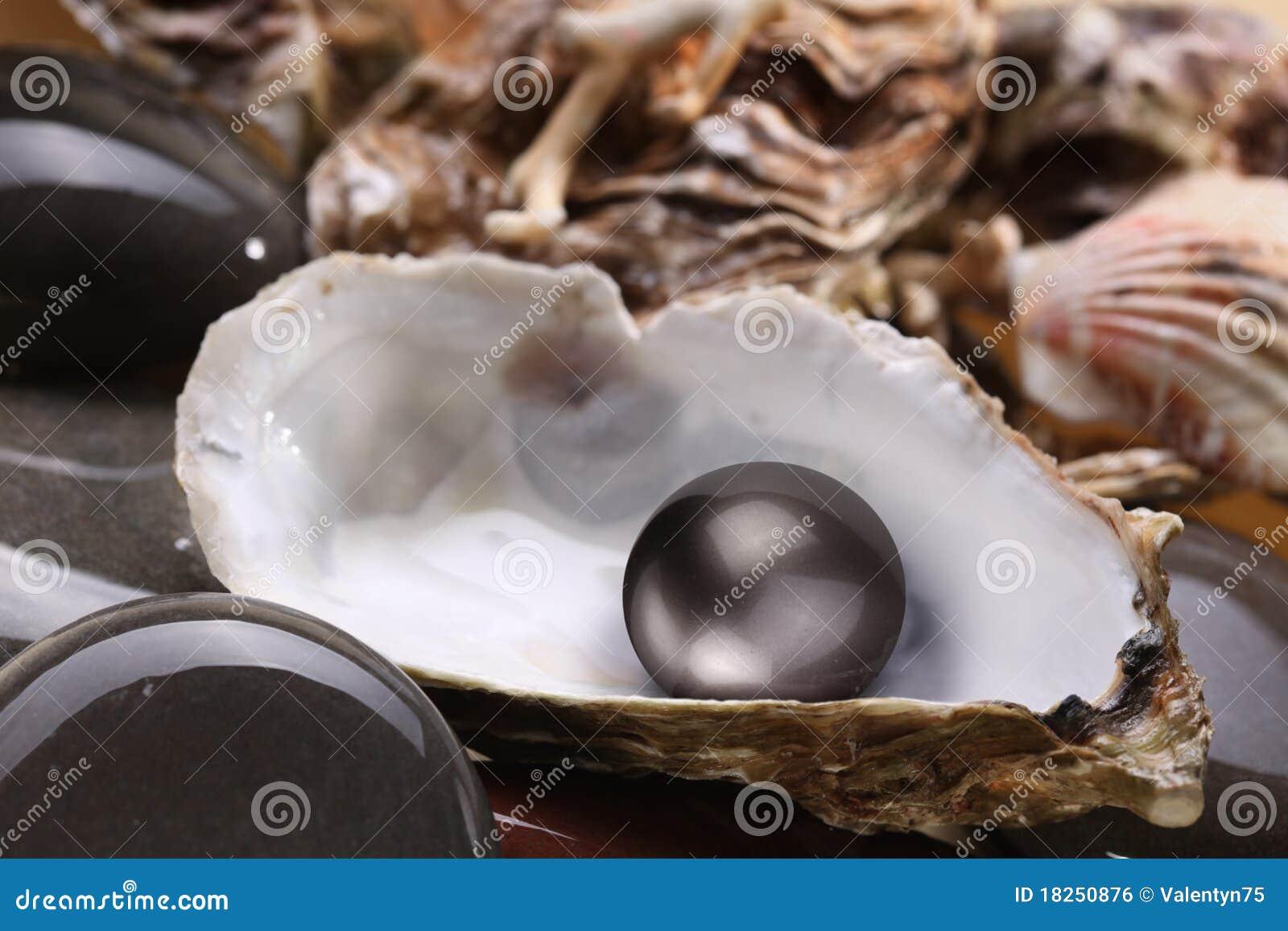 f7d2ef595168 Imagen De Una Perla Negra En El Shell Foto de archivo - Imagen de ...