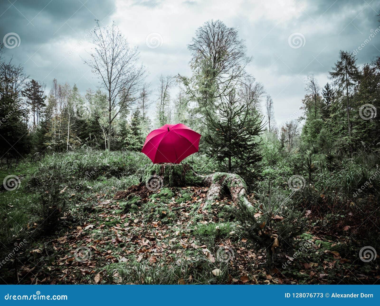 Imagen del paraguas rosáceo rojo en un tronco en el bosque