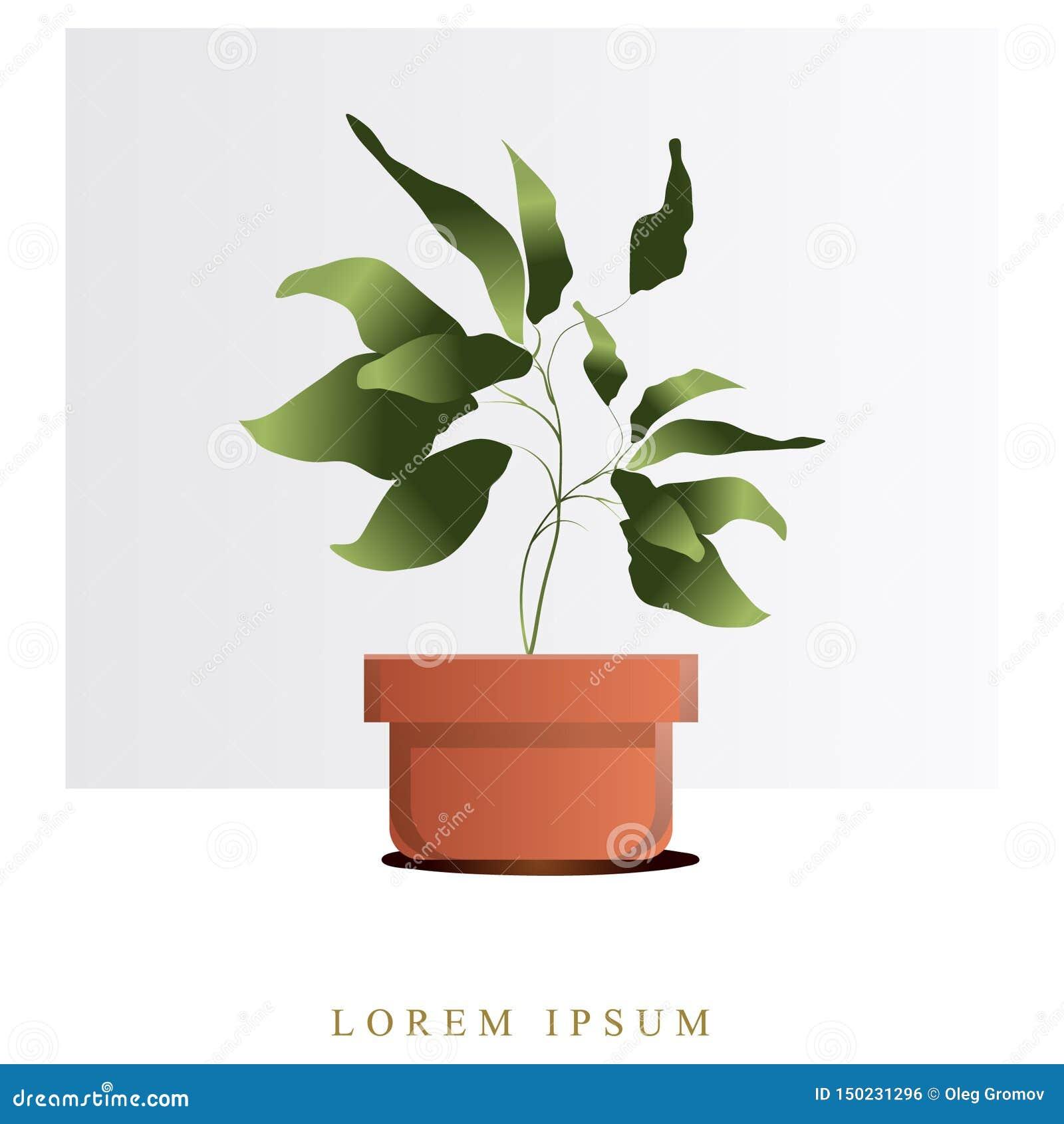 Imagen del vector de flores y de plantas en los potes, ikebana