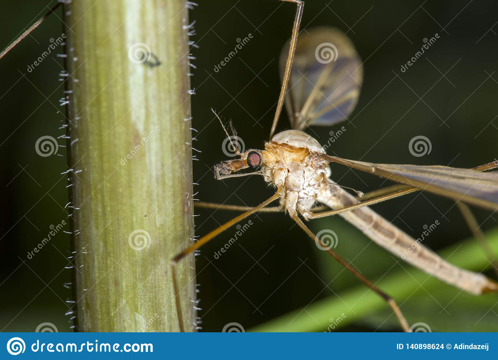 Imagen macra de mosquitos en la planta
