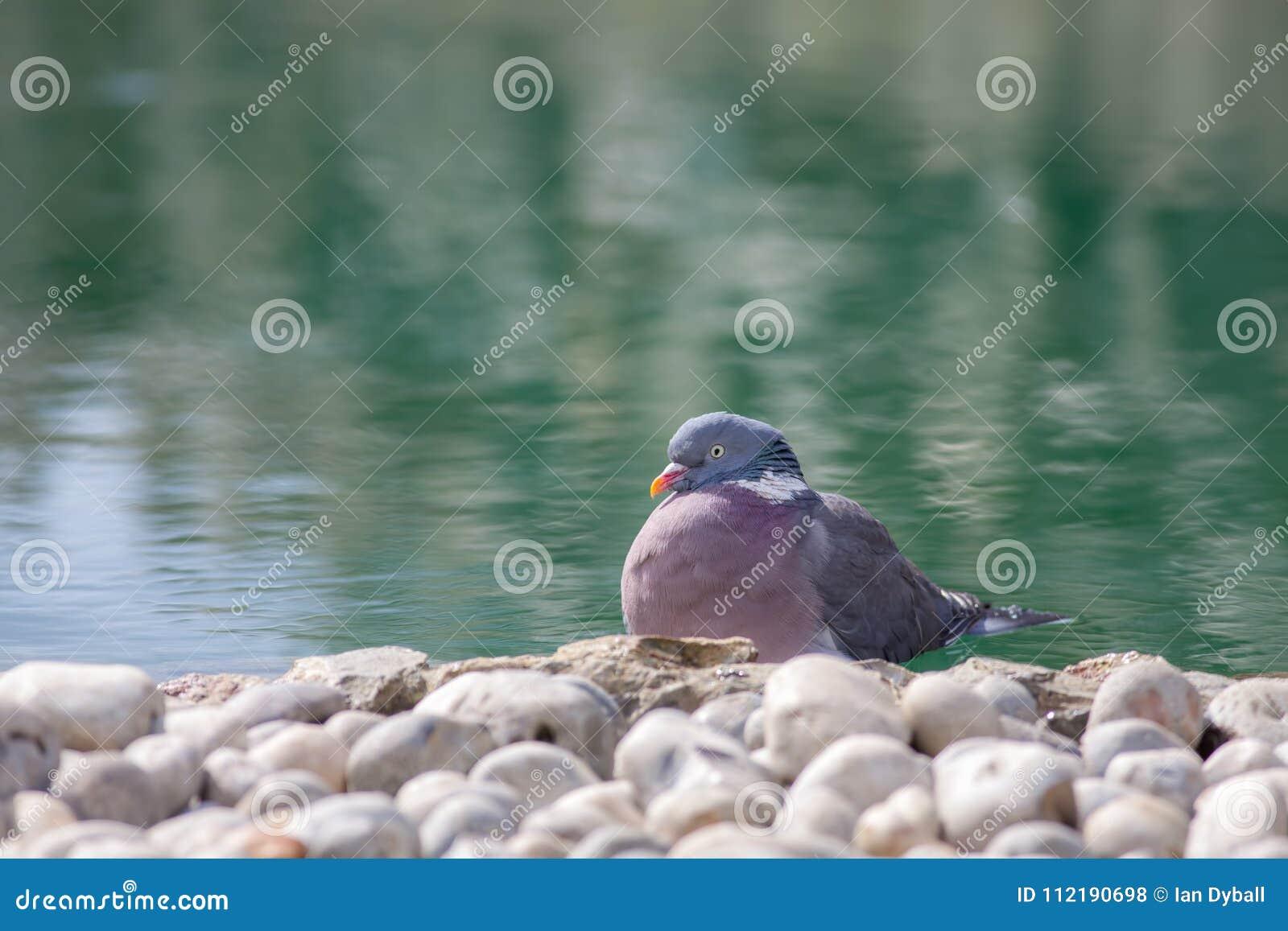 Imagen serena de la naturaleza del jardín del zen Pájaro sereno por la charca ornamental