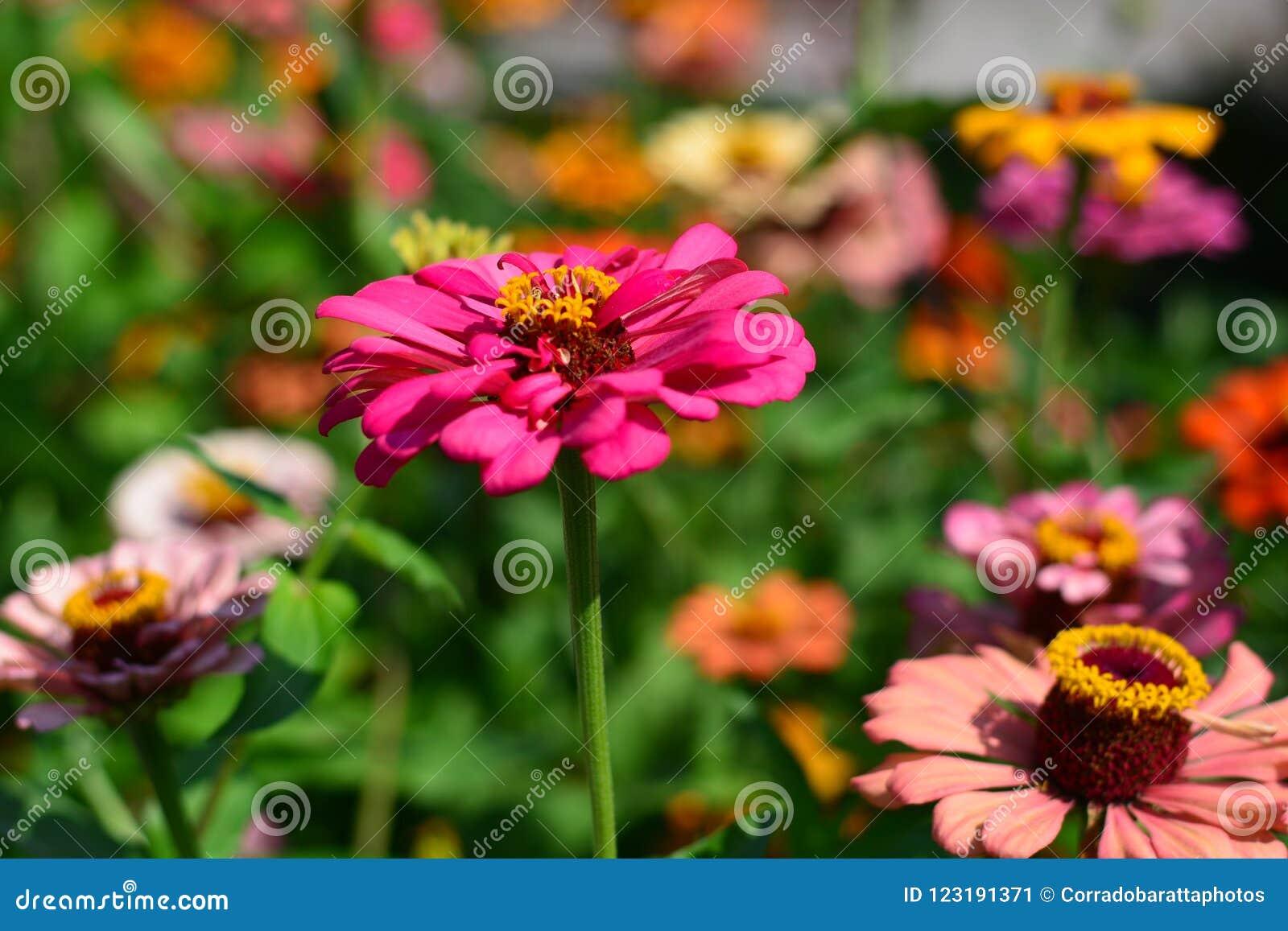 Imagination de couleurs des fleurs au ressort