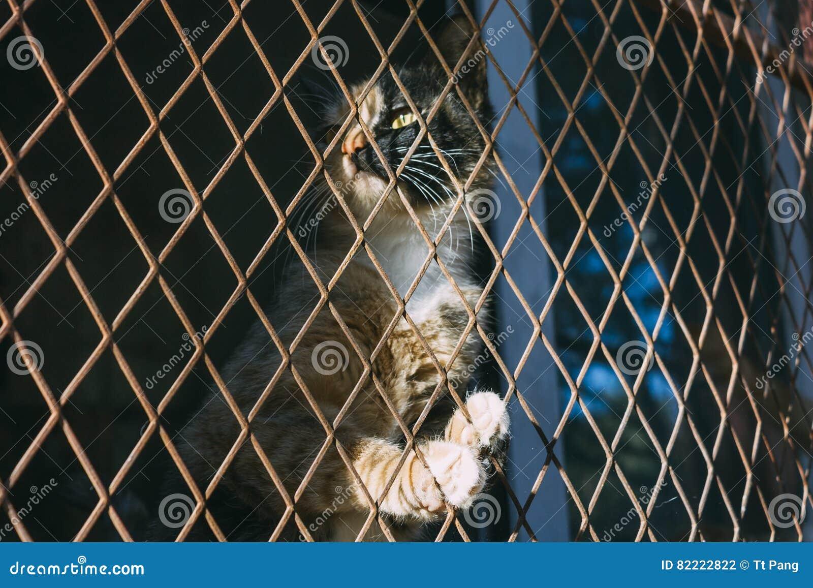 Imbirowego i czarnego kota oklepiec i wtyka w stalowym drucianym siatkarstwie, c