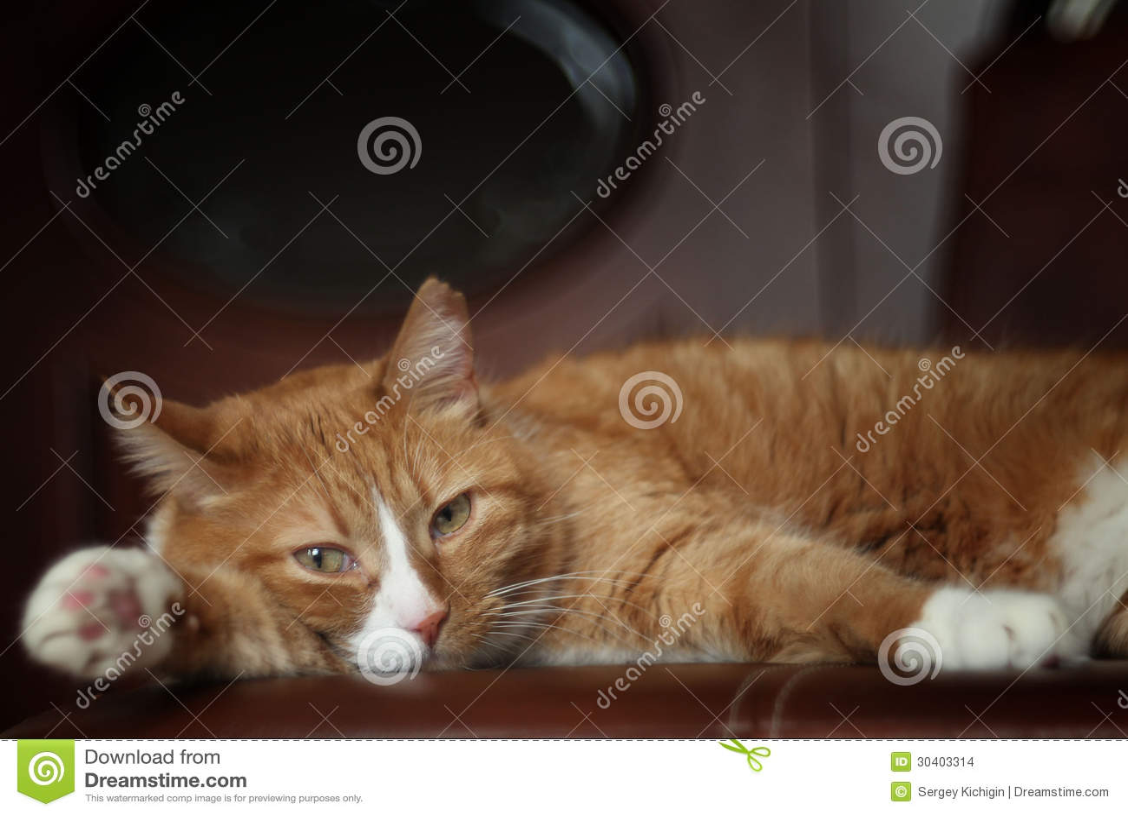 Imbirowy kota lying on the beach na leżance
