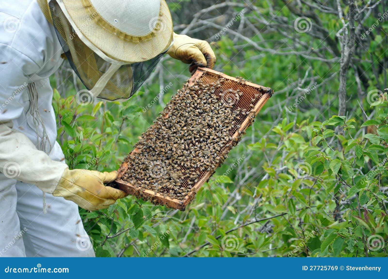 Imker mit einem Feld der Bienen