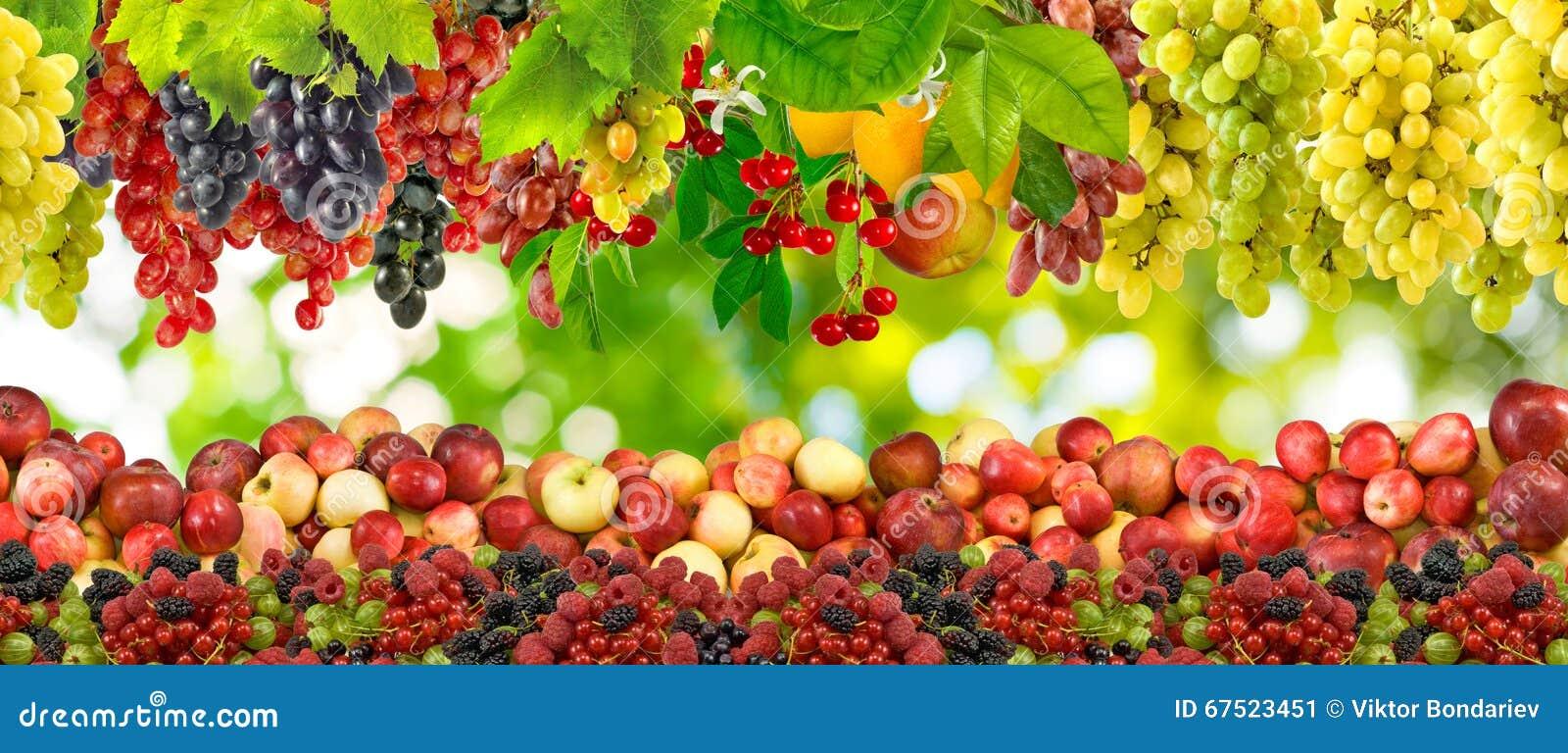 Immagine dei molti primo piano di frutti