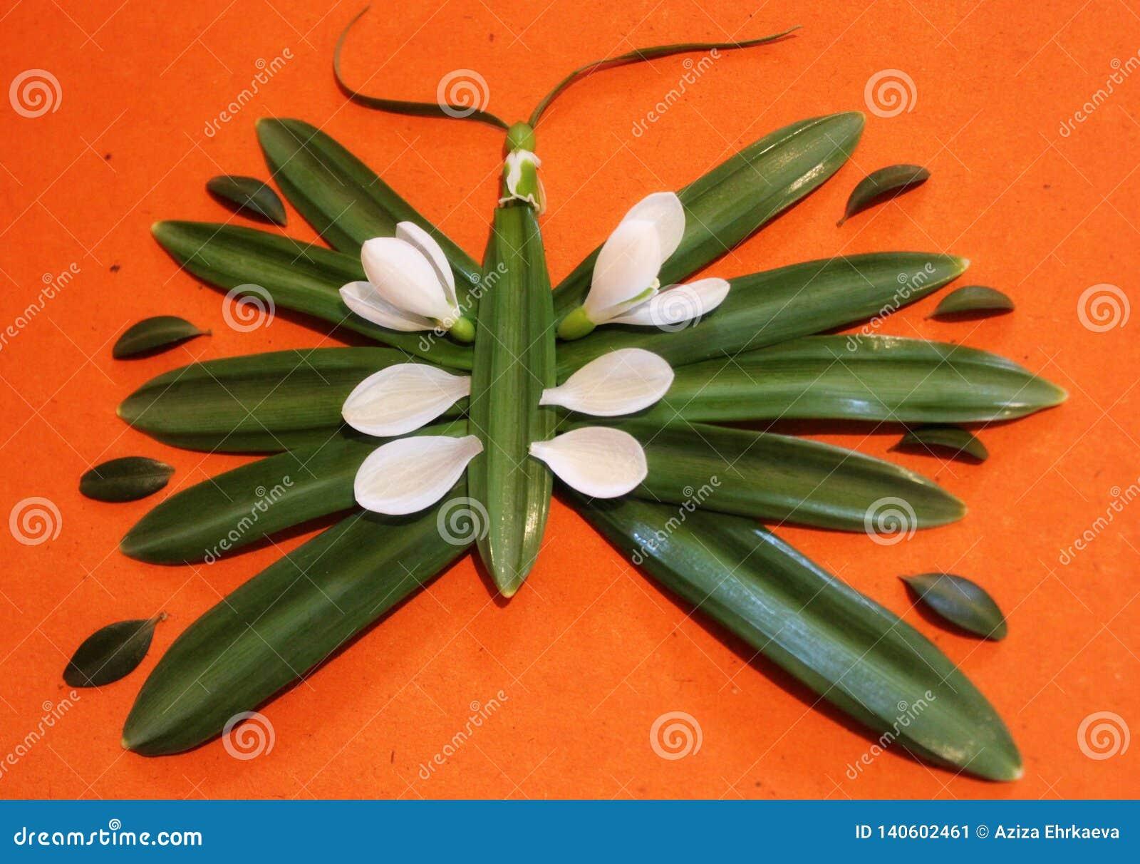 Immagine della primavera dei fiori e delle foglie, creatività e creatività, bucaneve, farfalla