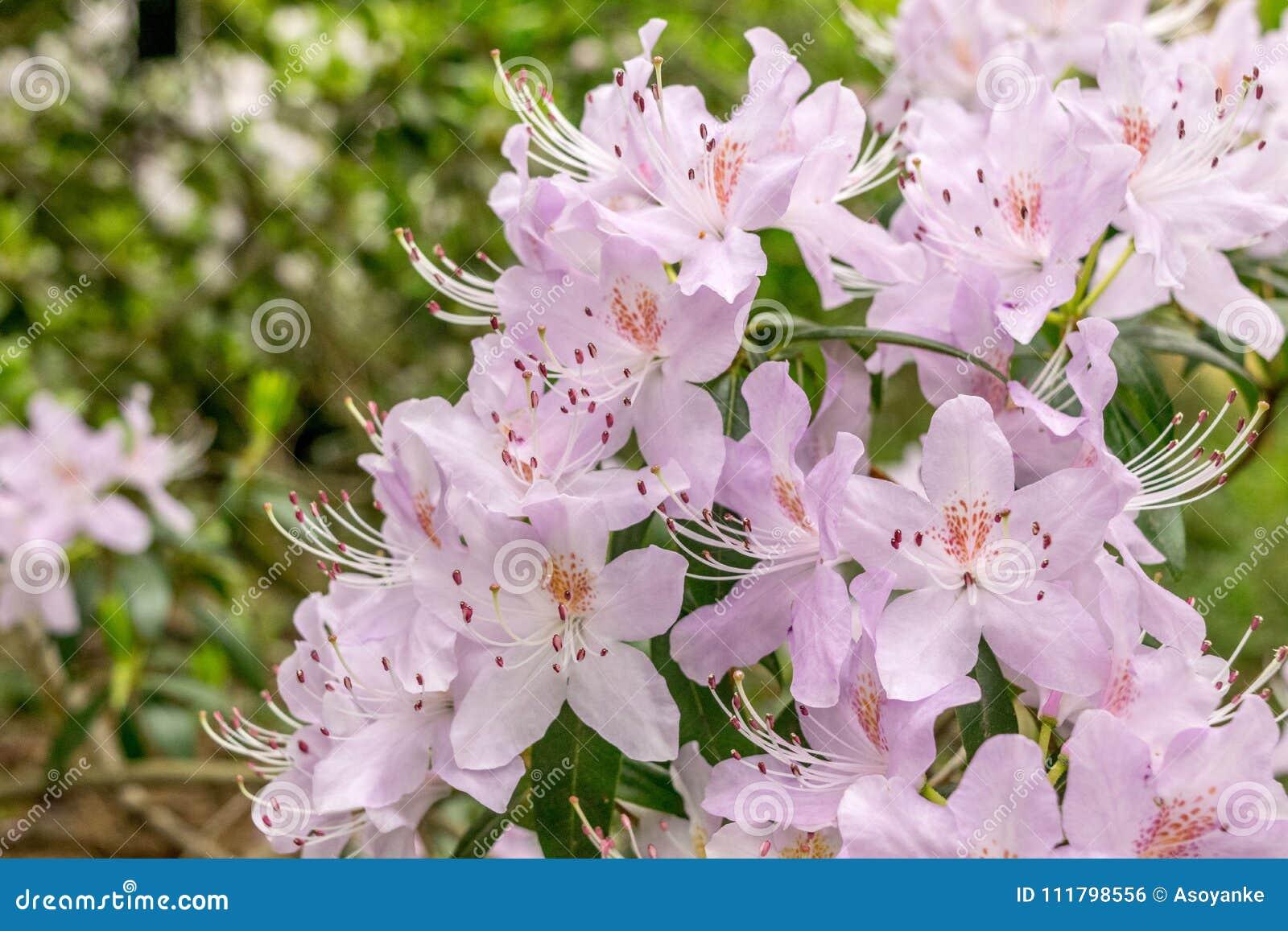 Immagine di bello bianco dei fiori, colpo ai giardini botanici reali, Kew