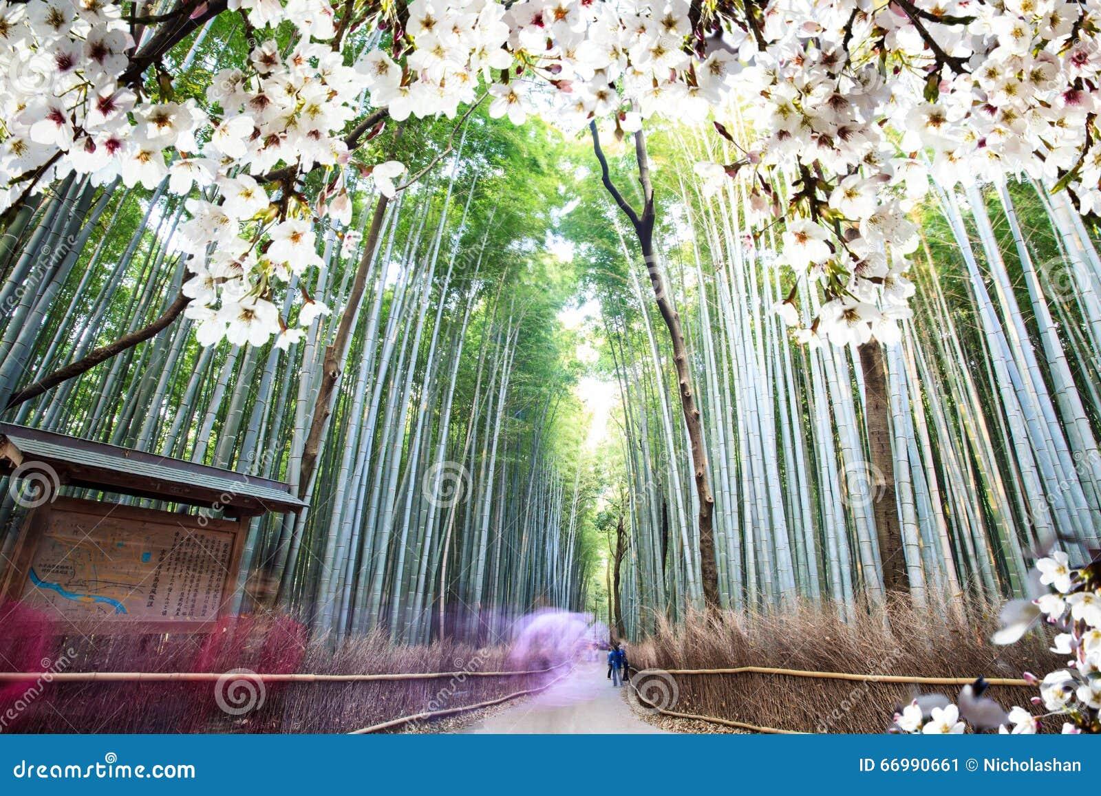Immagine di bello seasnon di sakura a Kyoto, Giappone