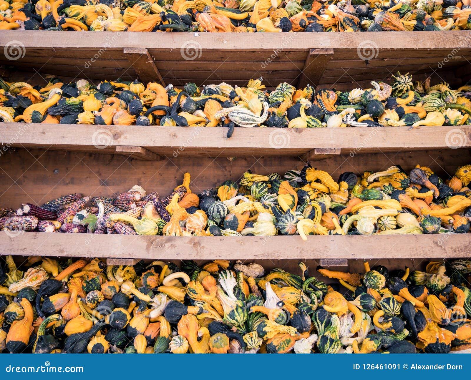 Immagine di piccoli pumkins e cereale in uno scaffale