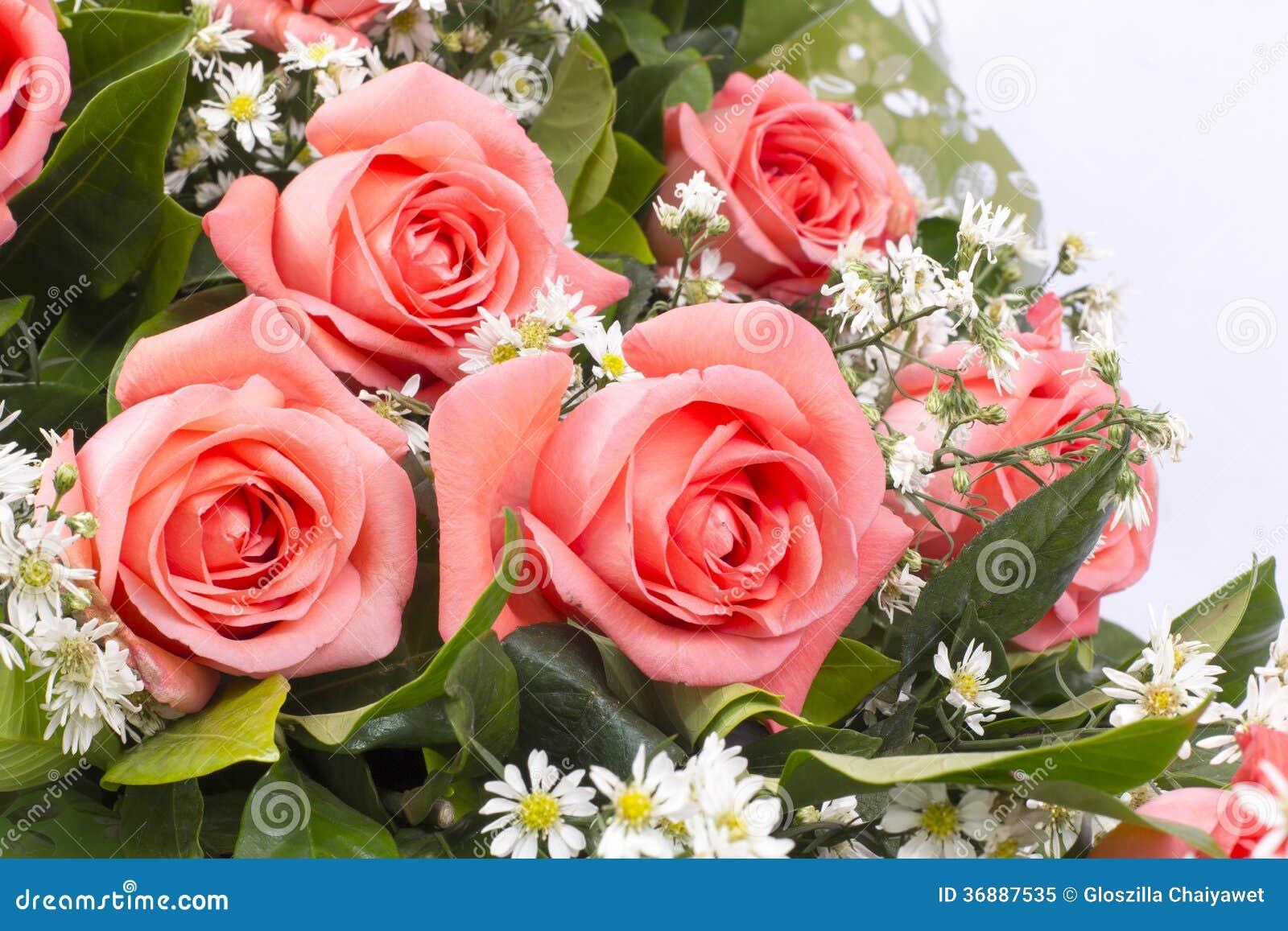 Download Immagine Di Sfondo Delle Rose Rosa Immagine Stock - Immagine di flora, fiore: 36887535
