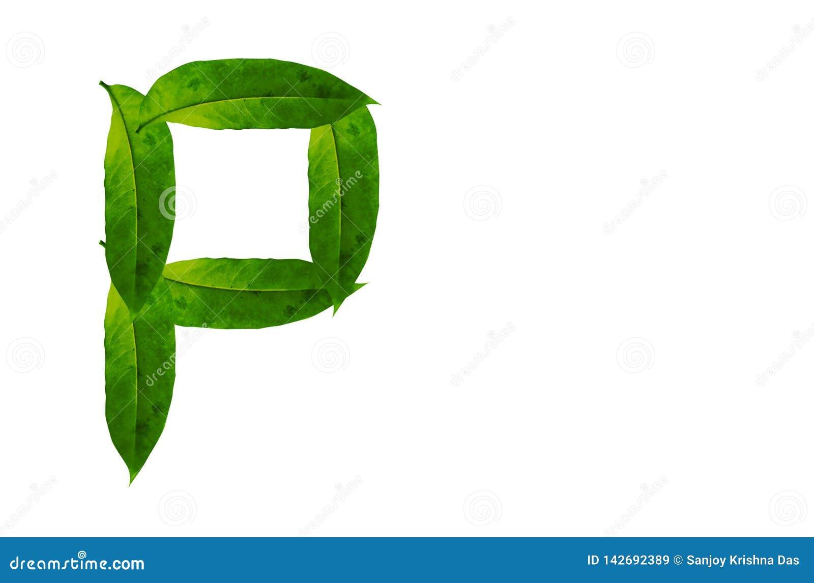 Immagine di sfondo verde della lettera P della foglia Alfabeto naturale della foglia della foresta