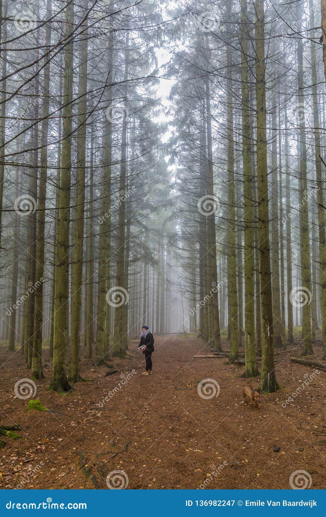 Immagine di una condizione della donna su una traccia che cerca il suo cane fra i pini alti nella foresta