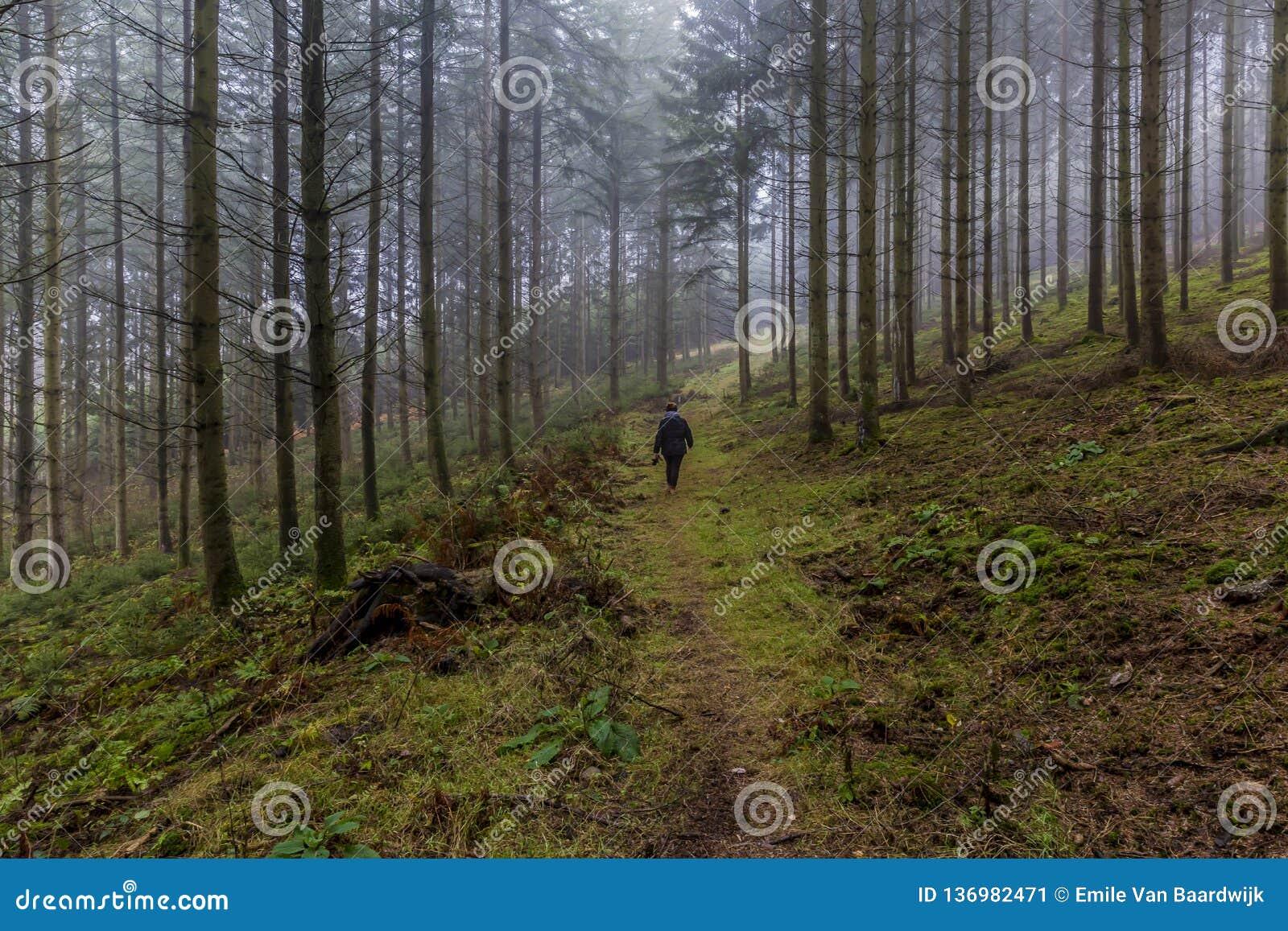 Immagine di una donna che cammina fra i pini alti nella foresta