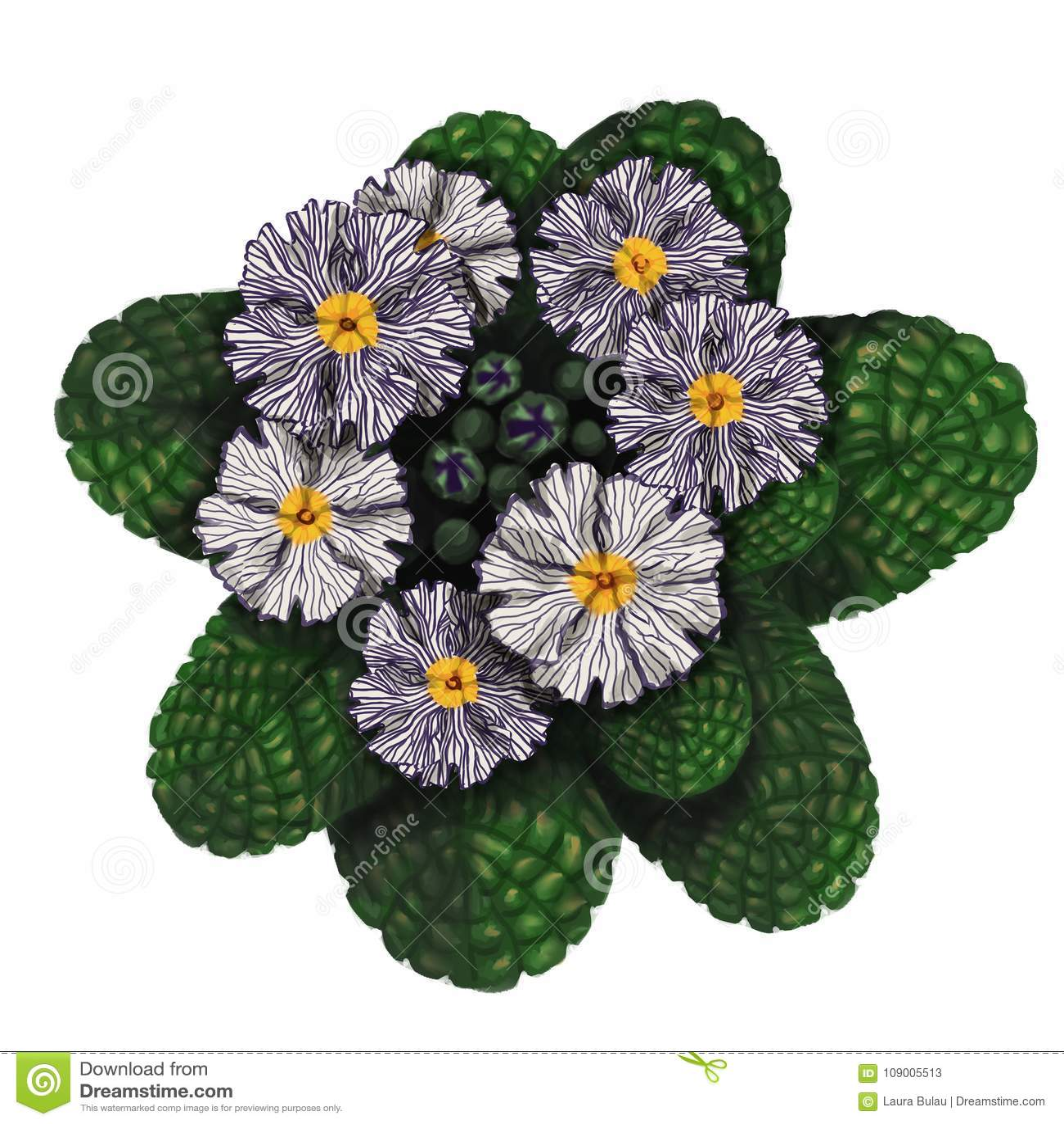 Immagine realistica dei fiori disegnati a mano della primaverina